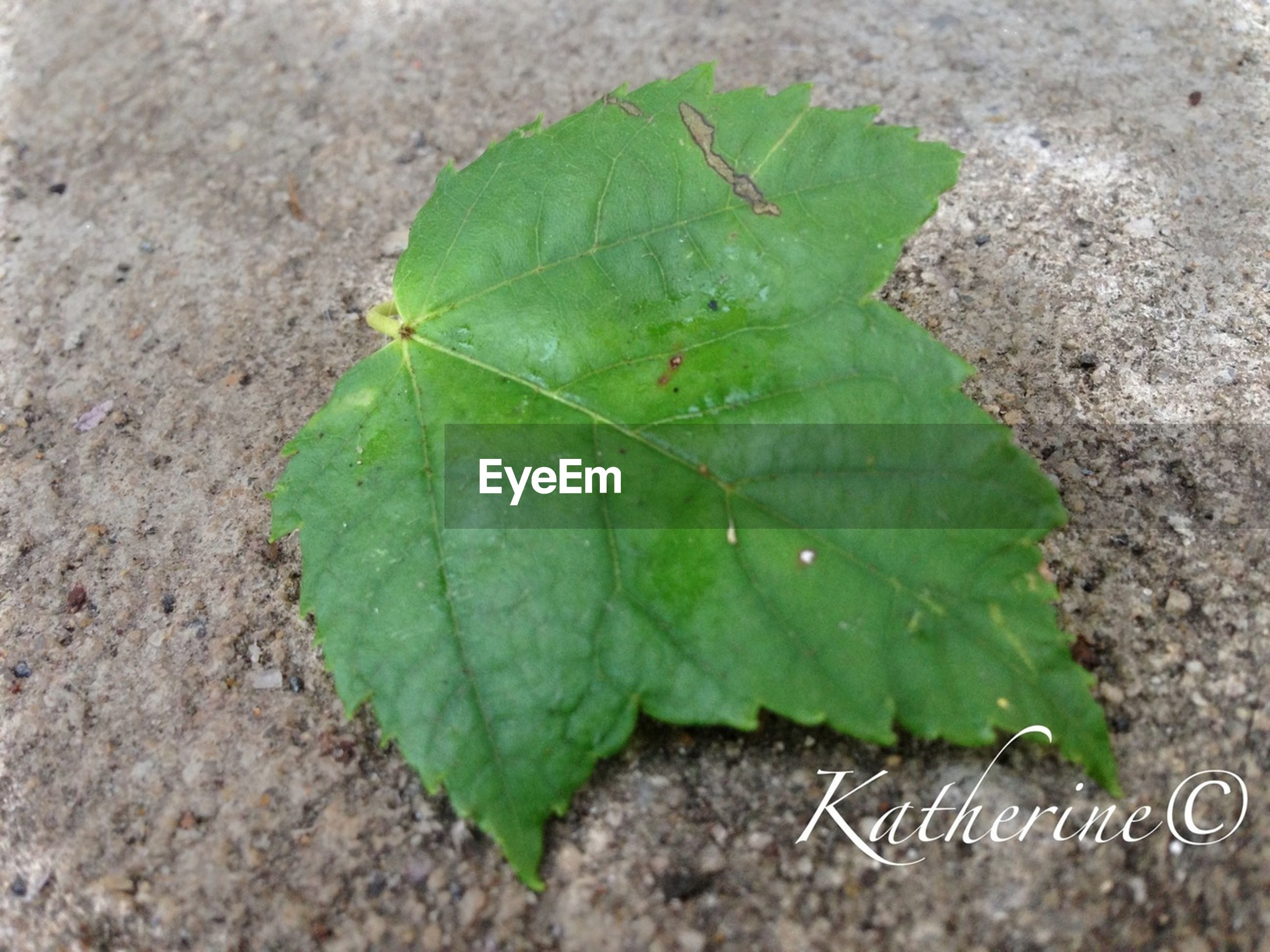 leaf, green color, leaf vein, close-up, high angle view, insect, nature, plant, green, ground, no people, day, selective focus, outdoors, natural pattern, growth, leaves, fragility, textured, one animal