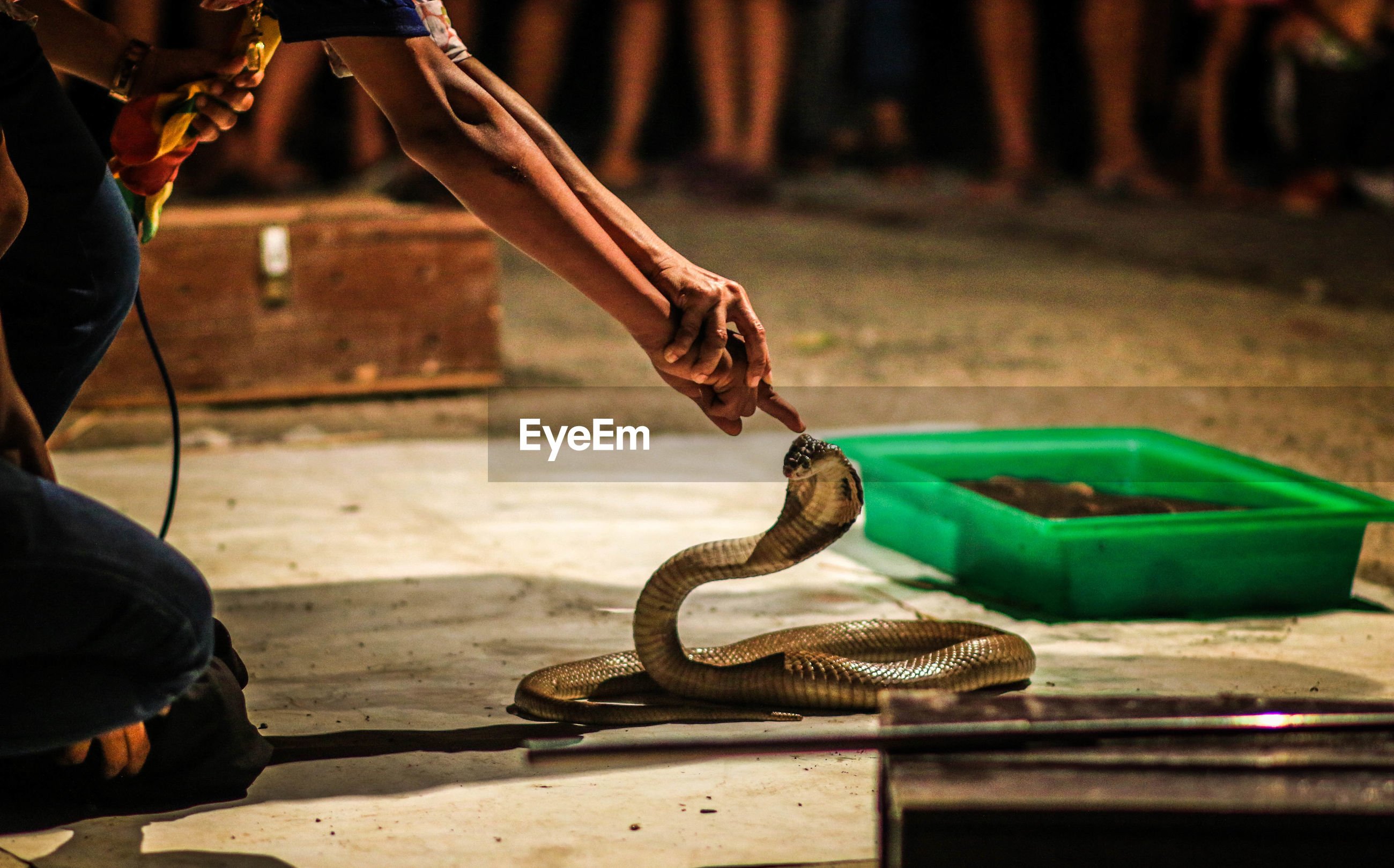 Cropped image of hands touching cobra on street