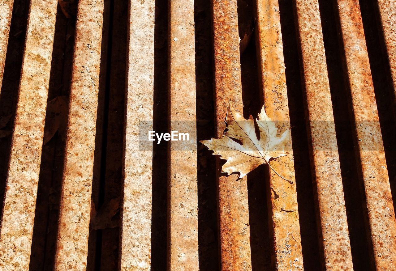 High Angle View Of Dry Maple Leaf On Rusty Metal