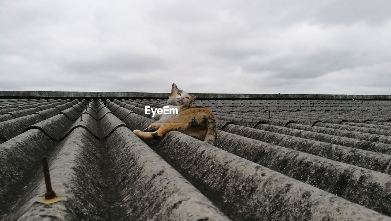 Cat On Roof Against Sky