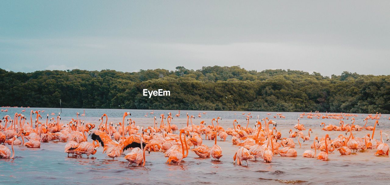 animals in the wild, vertebrate, flamingo, water, animal, animal themes, large group of animals, bird, animal wildlife, group of animals, beauty in nature, nature, sky, no people, plant, lake, scenics - nature, waterfront, day, flock of birds, outdoors, freshwater bird