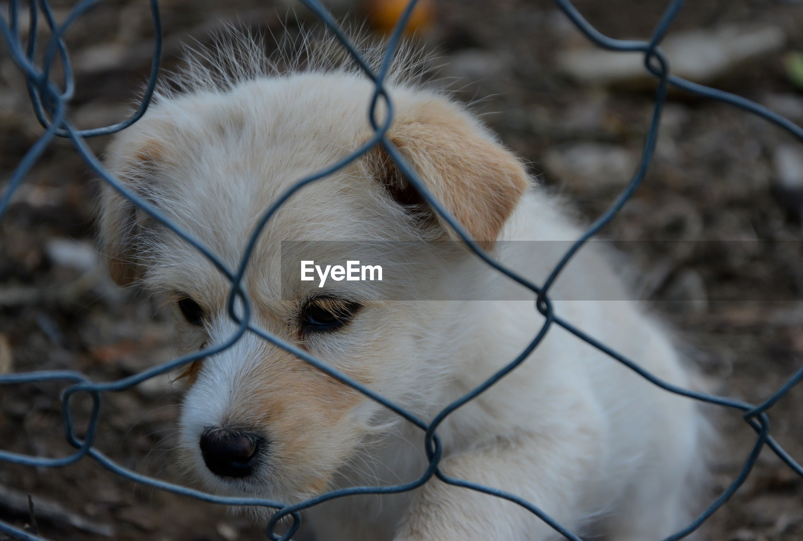 Close-up of dog seen through fence