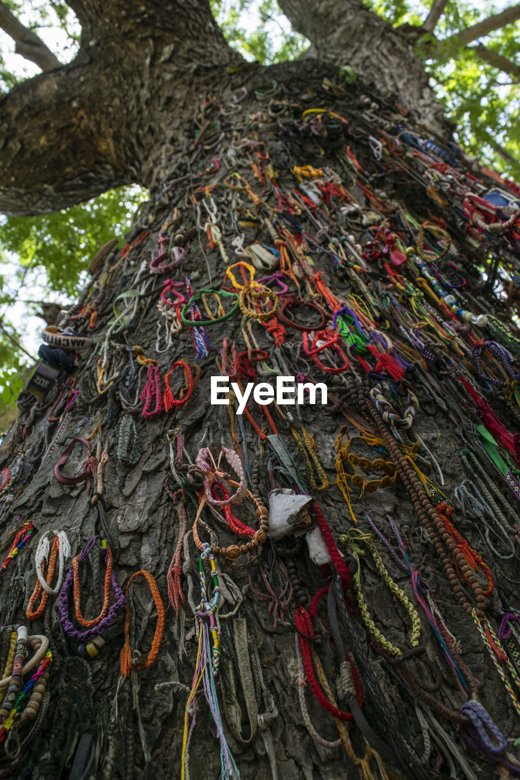 Low angle view of praying threads tied on tree trunk