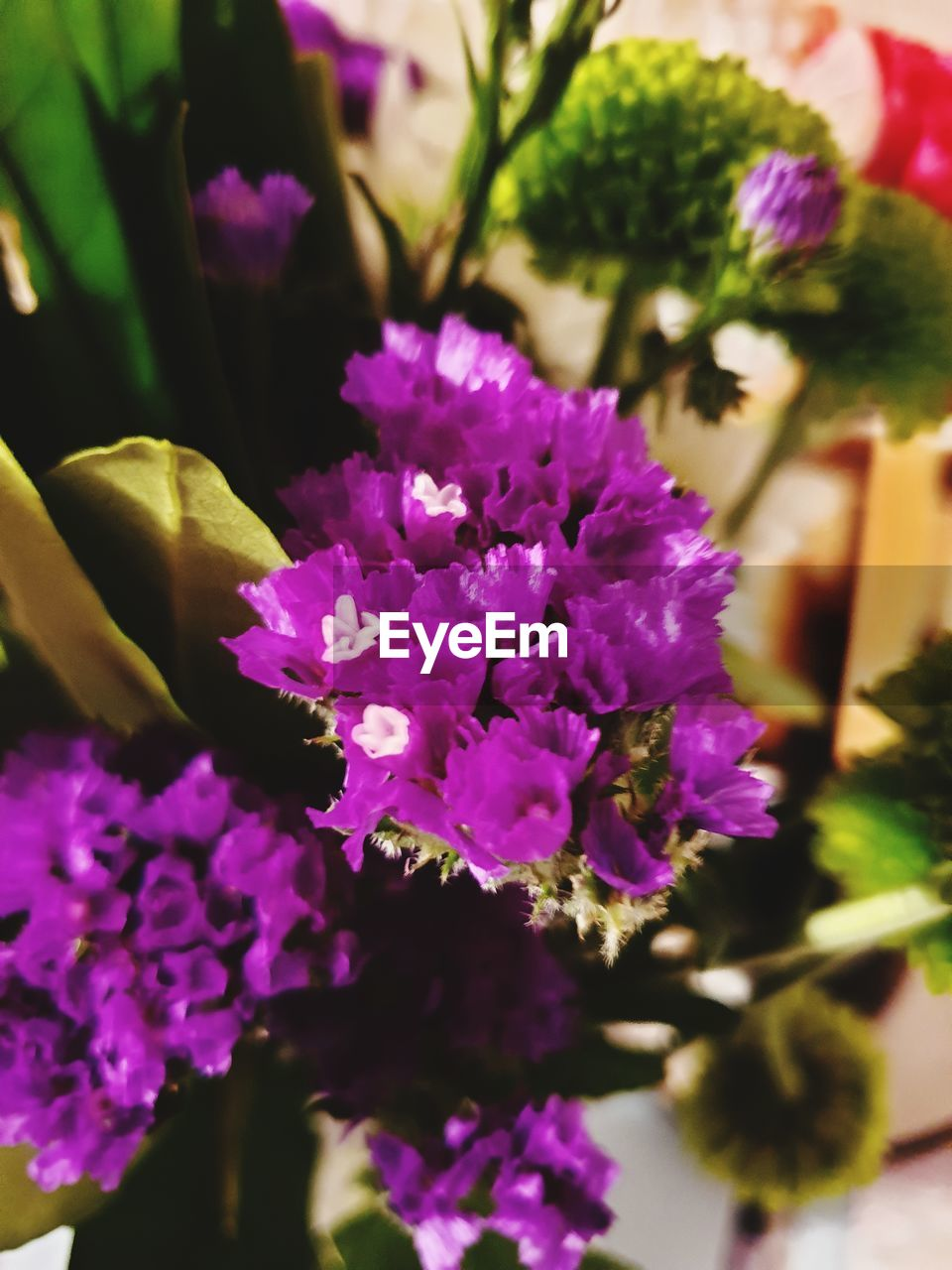 flowering plant, flower, vulnerability, fragility, freshness, plant, beauty in nature, purple, close-up, petal, growth, flower head, nature, inflorescence, no people, selective focus, day, plant part, outdoors, focus on foreground, lilac, bunch of flowers
