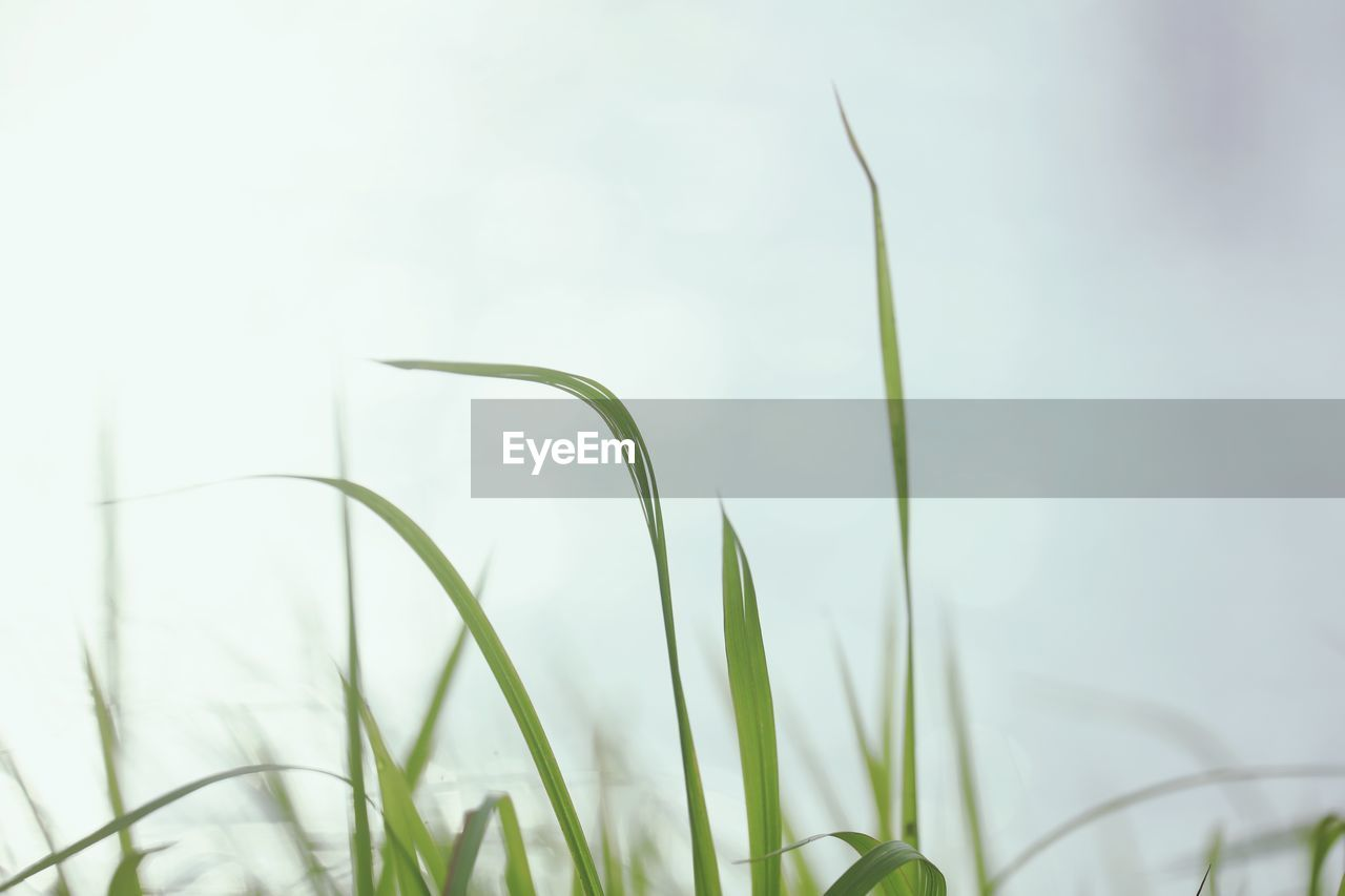 growth, plant, green color, beauty in nature, nature, close-up, focus on foreground, day, selective focus, grass, no people, tranquility, blade of grass, vulnerability, outdoors, fragility, freshness, field, botany, land