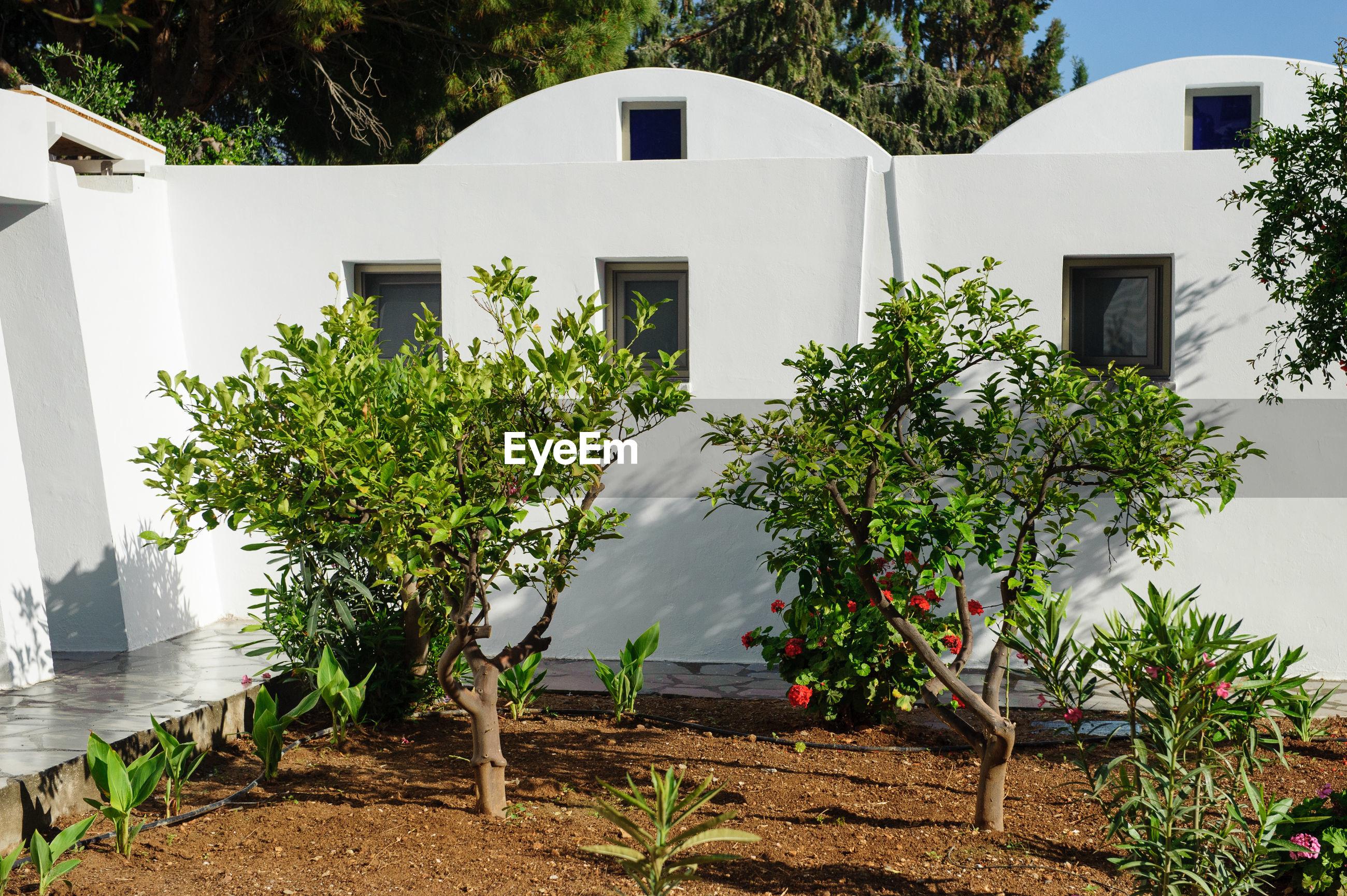 PLANTS AGAINST BUILDING