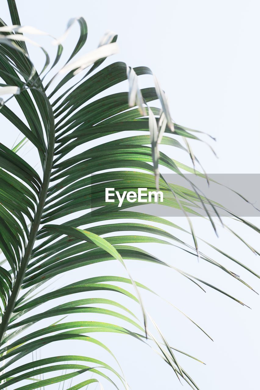 Close-Up Of Palm Leaf Against Clear Sky