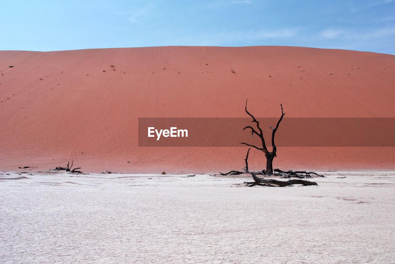 Bare Tree In The Desert