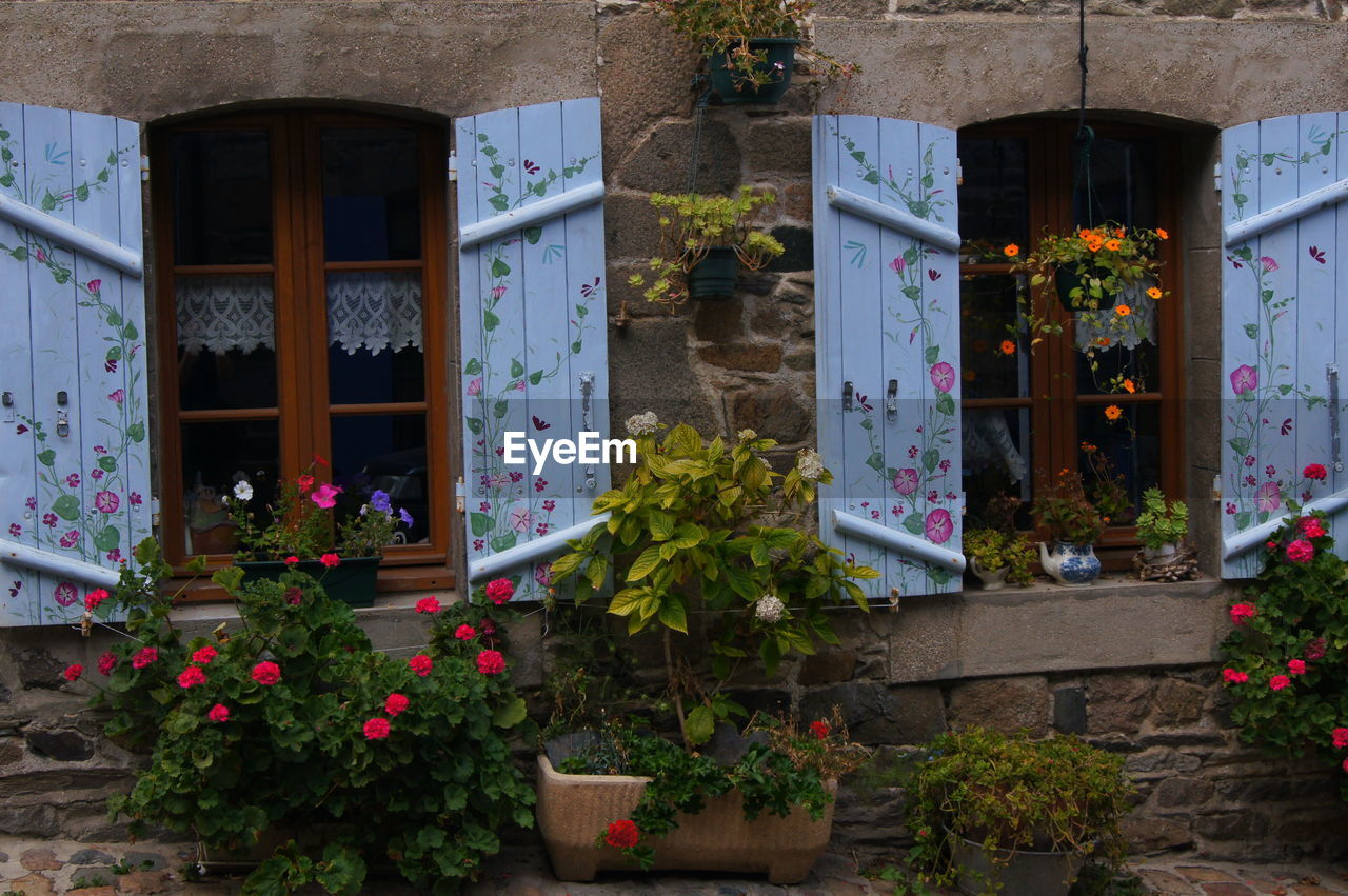 Flowering plants against house
