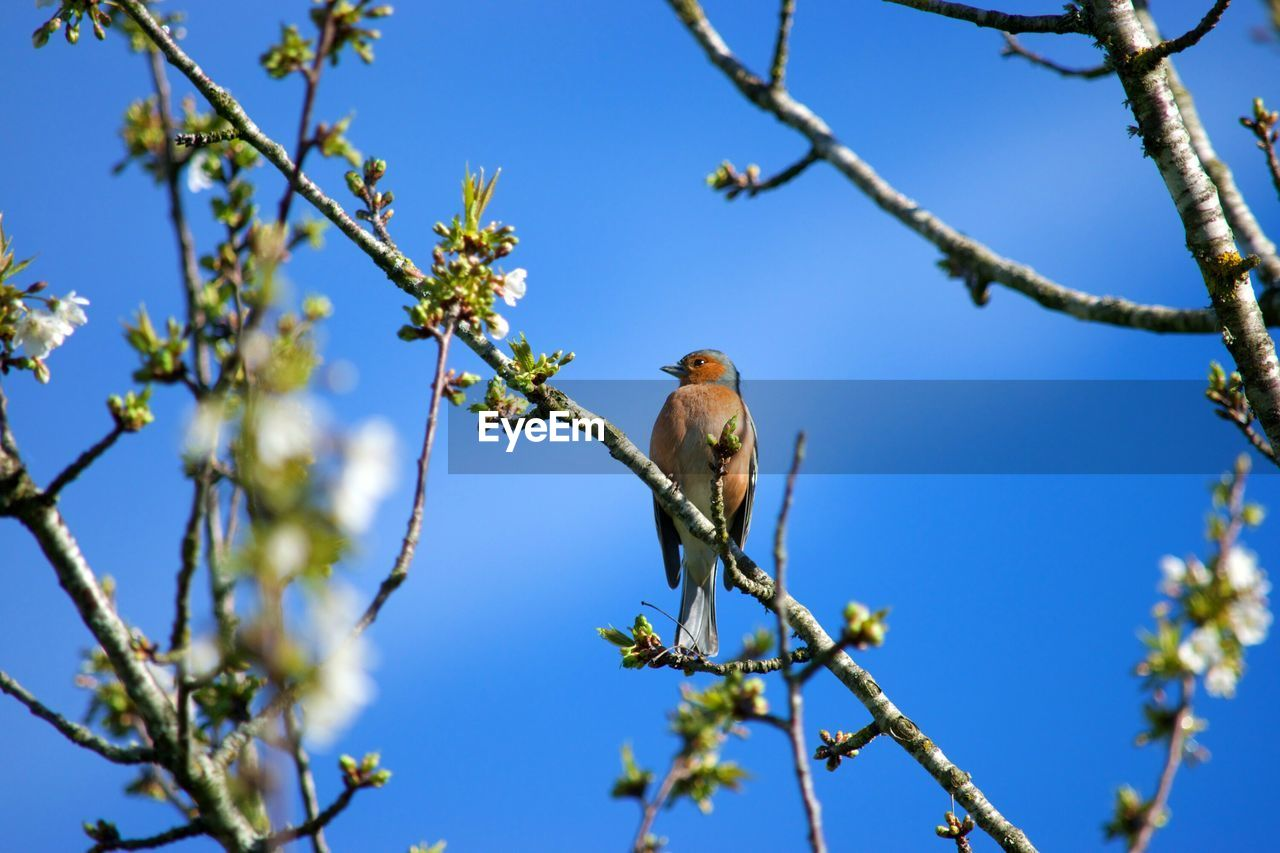 tree, bird, plant, animals in the wild, animal themes, vertebrate, animal, branch, animal wildlife, perching, one animal, low angle view, sky, nature, clear sky, blue, no people, beauty in nature, day, growth, outdoors