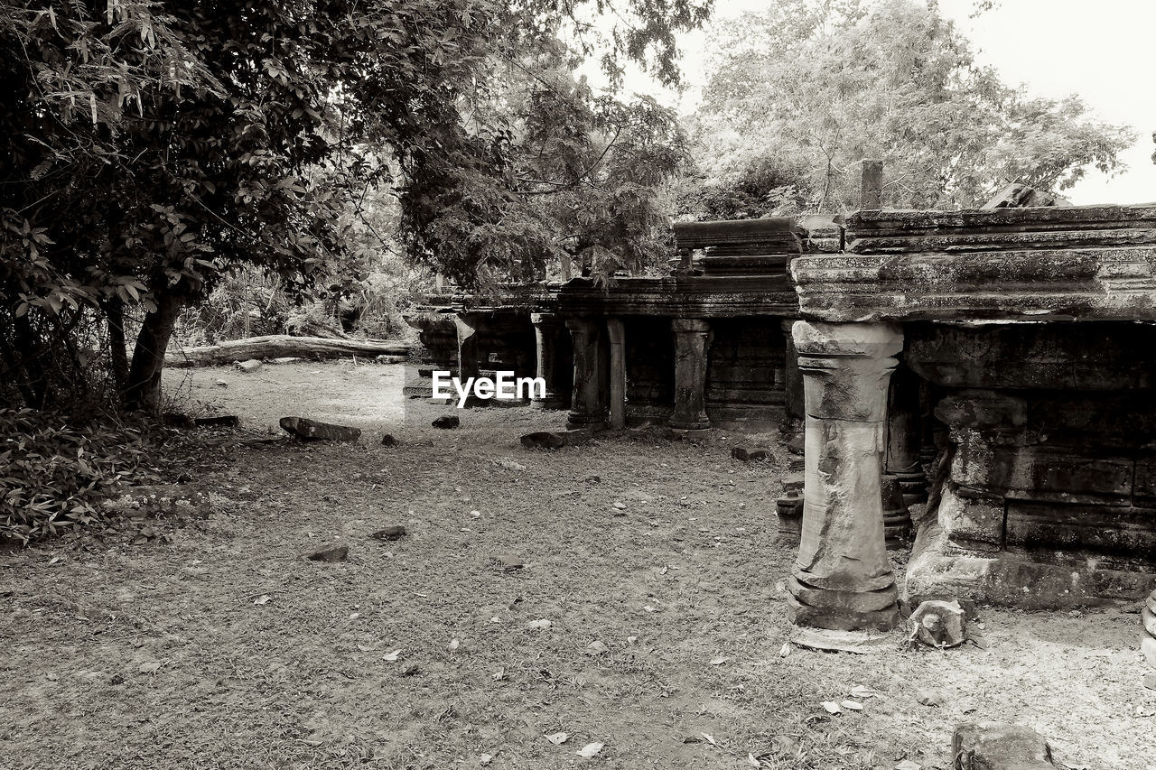 tree, plant, built structure, architecture, nature, day, no people, land, history, the past, ancient, religion, outdoors, old, belief, growth, spirituality, architectural column, place of worship, ancient civilization, ruined