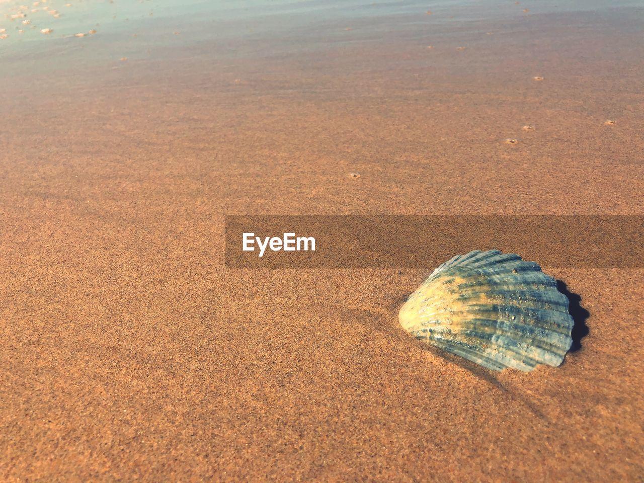 sea, land, shell, beach, animal wildlife, sand, water, nature, animal, animal shell, no people, seashell, day, beauty in nature, animal themes, one animal, high angle view, outdoors, tranquility, marine