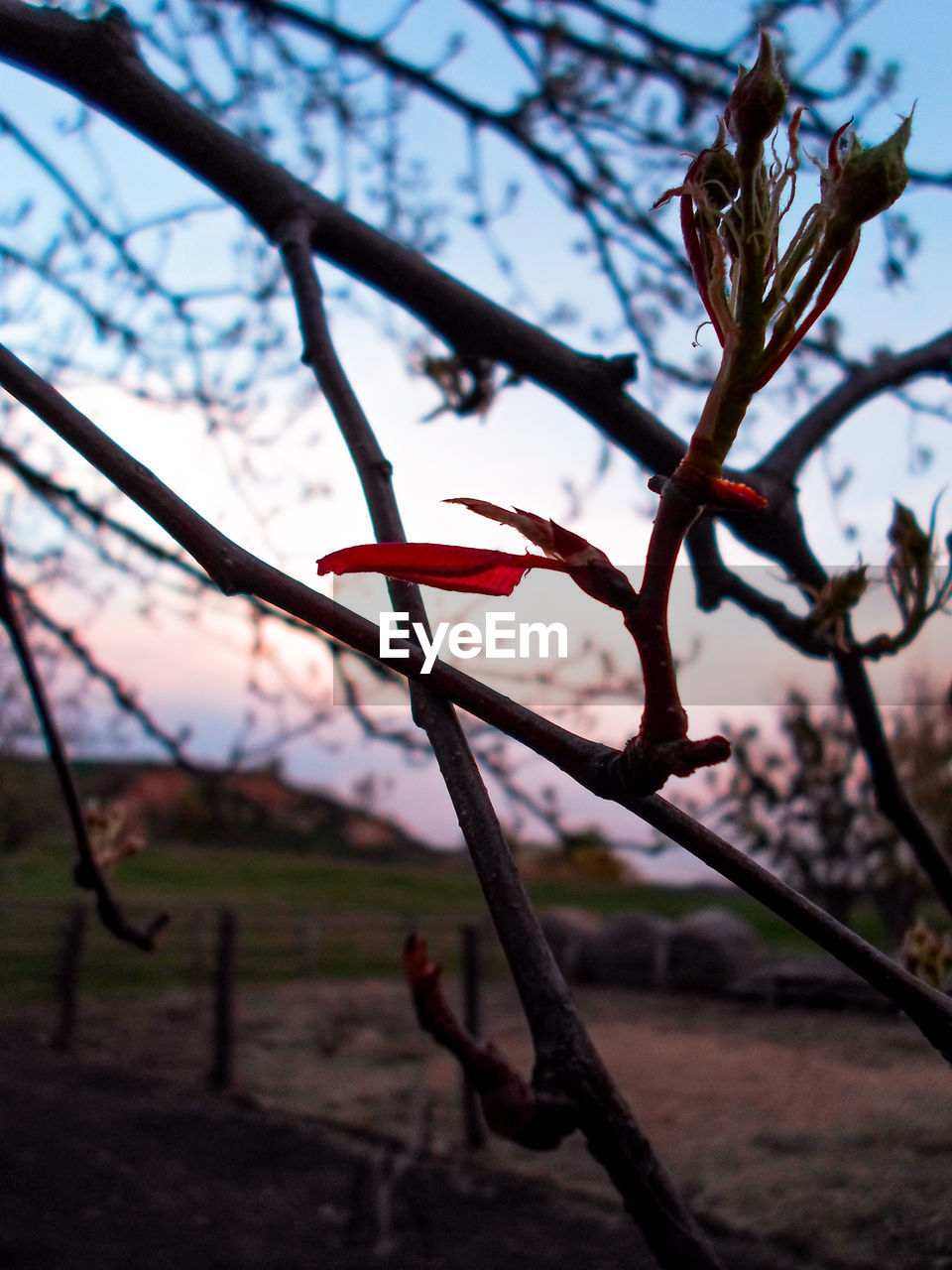 tree, focus on foreground, nature, growth, no people, day, outdoors, branch, beauty in nature, close-up