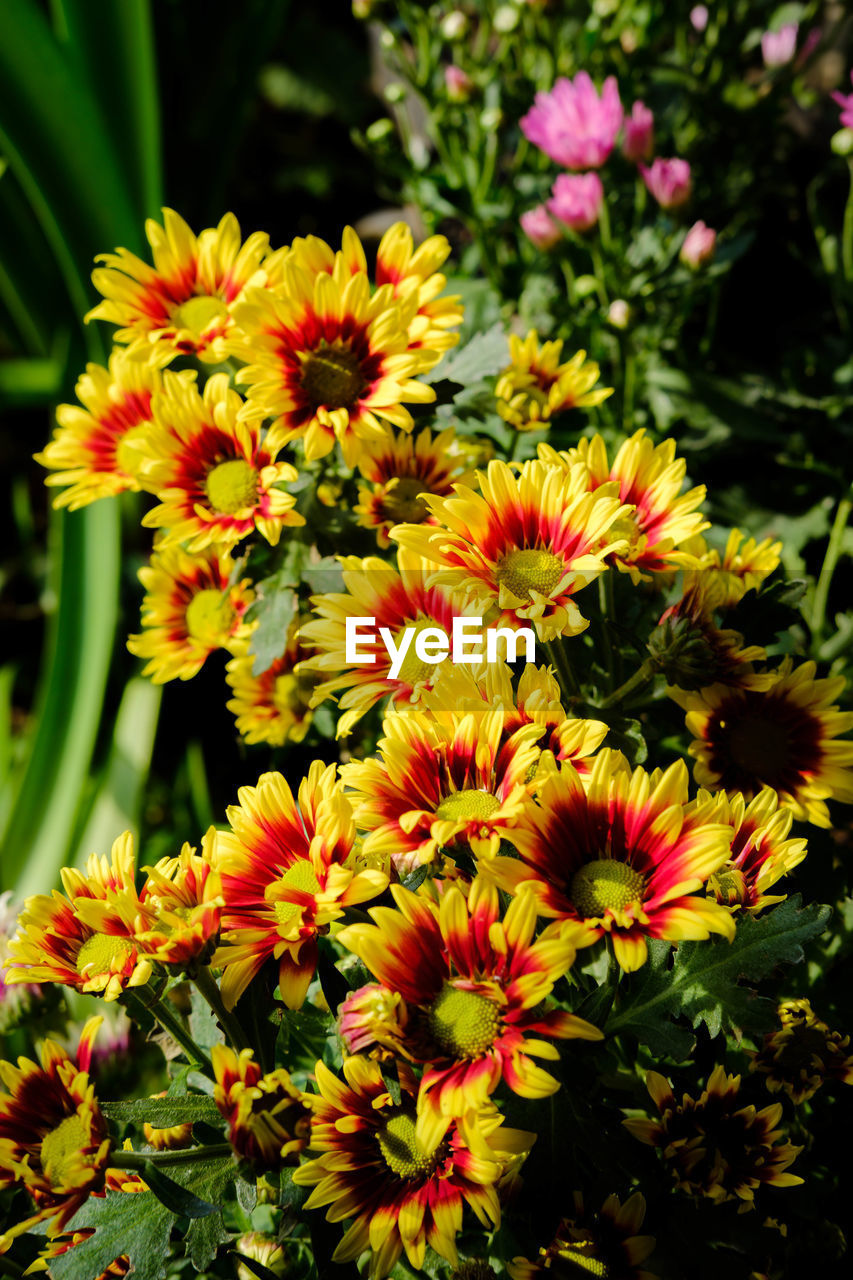 flower, nature, plant, beauty in nature, growth, yellow, fragility, petal, freshness, no people, outdoors, flower head, blooming, day, close-up