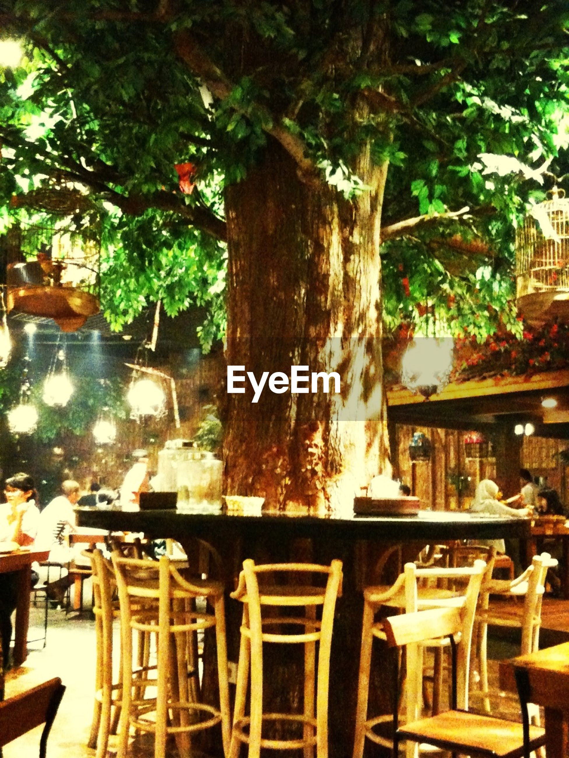 table, chair, tree, restaurant, absence, indoors, empty, place setting, arrangement, sunlight, drink, sidewalk cafe, dining table, seat, food and drink, day, cafe, arranged, potted plant, in a row