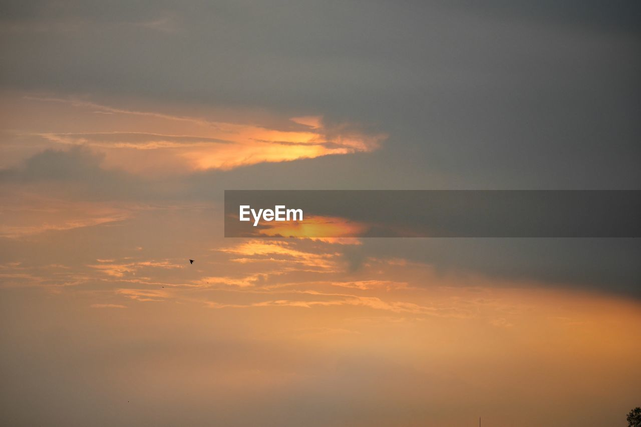 sky, cloud - sky, sunset, flying, beauty in nature, orange color, bird, air vehicle, animal, vertebrate, scenics - nature, animal themes, no people, tranquil scene, animal wildlife, mid-air, airplane, animals in the wild, low angle view, nature, outdoors