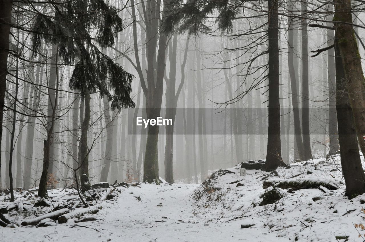 cold temperature, tree, winter, snow, forest, land, tree trunk, trunk, plant, beauty in nature, fog, tranquility, scenics - nature, nature, environment, no people, tranquil scene, woodland, branch, outdoors, snowing, hazy