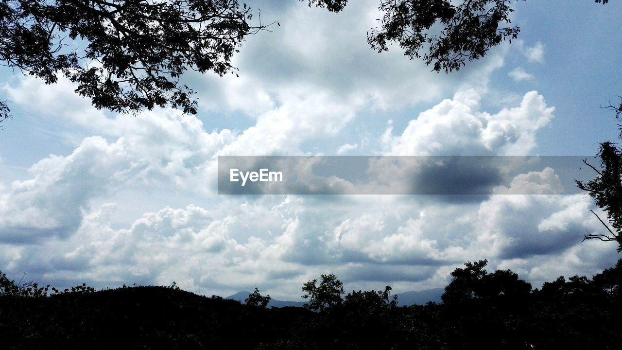 tree, sky, cloud - sky, plant, beauty in nature, tranquility, nature, silhouette, tranquil scene, scenics - nature, no people, low angle view, day, growth, outdoors, non-urban scene, land, landscape, environment, idyllic