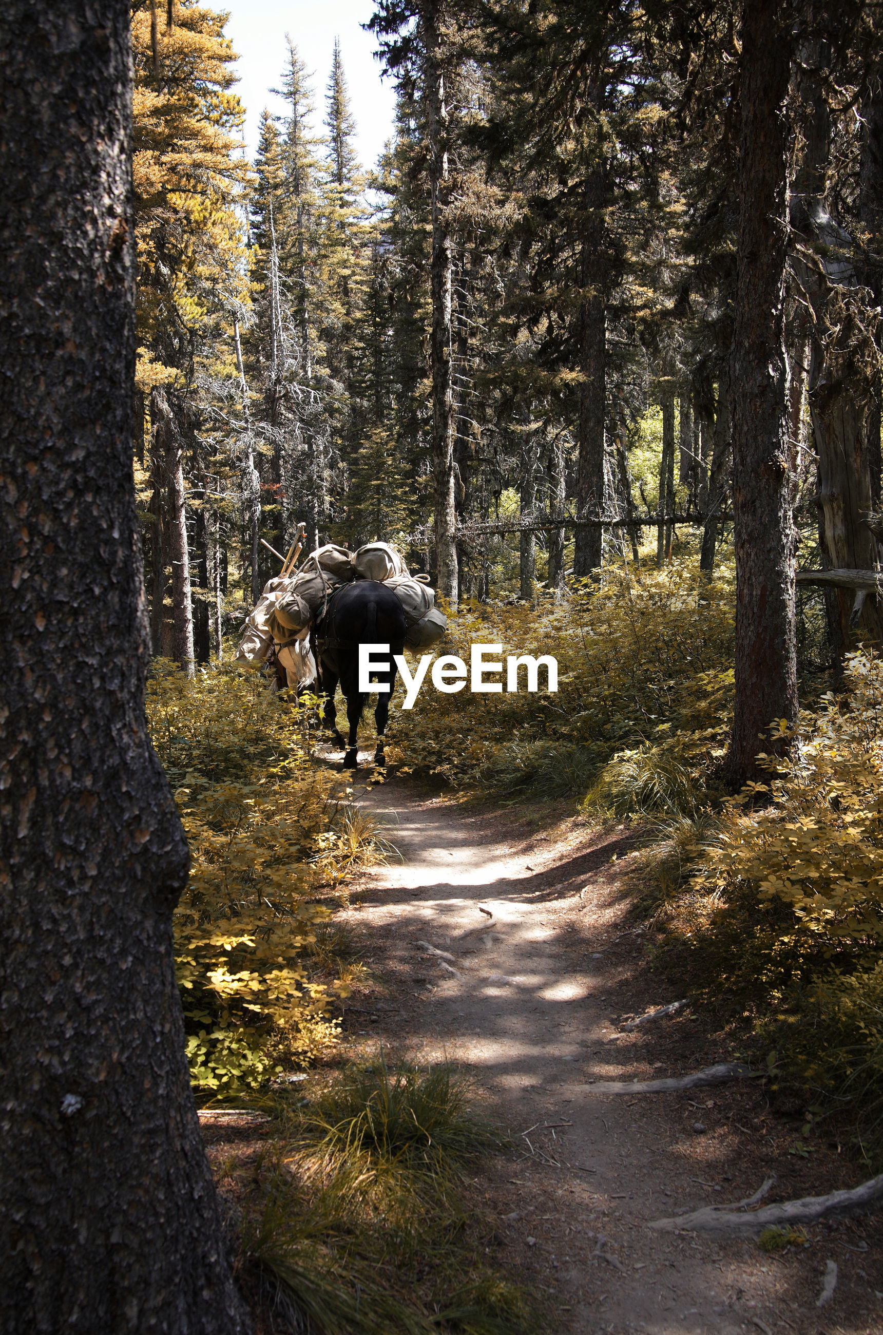 Horse walking in forest
