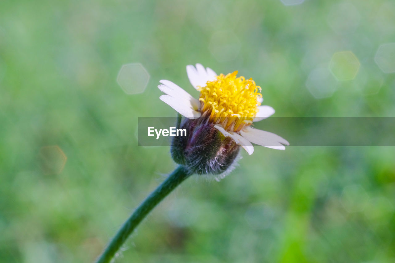 flowering plant, flower, plant, vulnerability, fragility, freshness, beauty in nature, growth, petal, flower head, close-up, inflorescence, nature, focus on foreground, no people, one animal, day, insect, invertebrate, animals in the wild, outdoors, purple, pollination, pollen