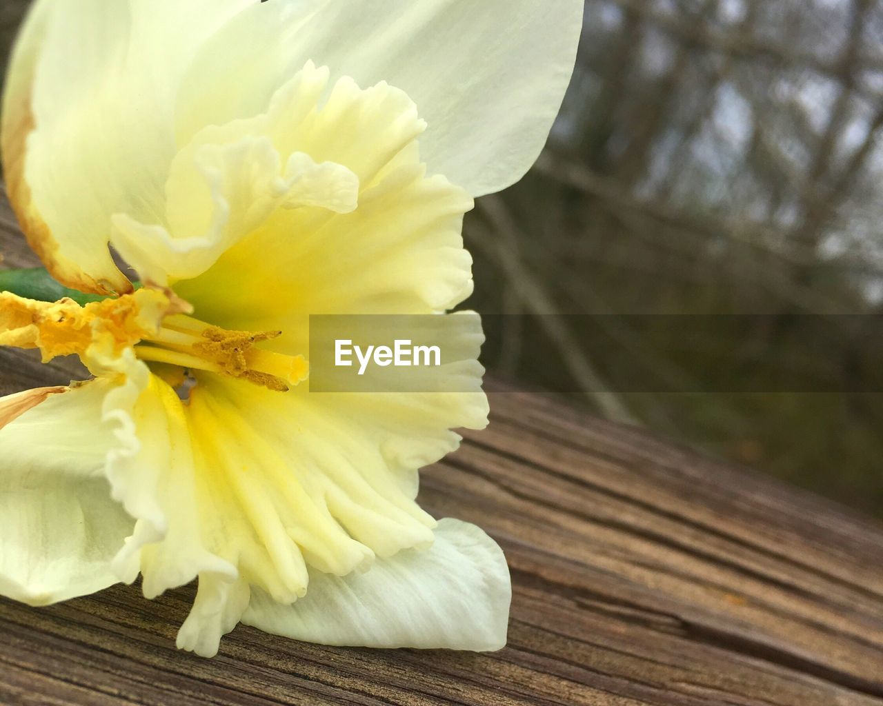 flower, petal, fragility, freshness, flower head, yellow, close-up, nature, beauty in nature, focus on foreground, plant, stamen, no people, wood - material, day, outdoors, growth, blooming