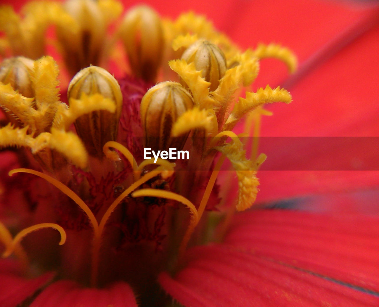 flower, petal, fragility, flower head, no people, close-up, freshness, nature, beauty in nature, indoors, day