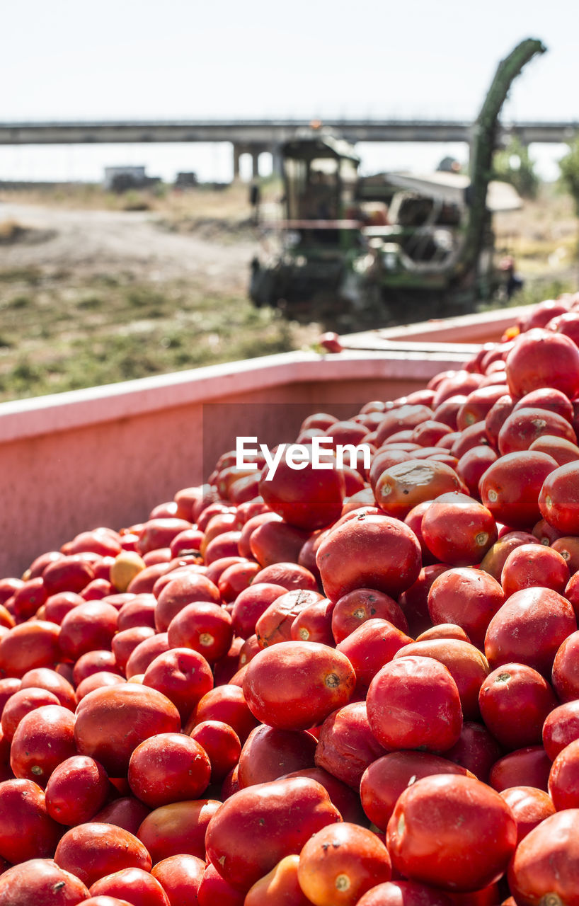 red, healthy eating, food, food and drink, day, fruit, focus on foreground, wellbeing, close-up, freshness, no people, abundance, large group of objects, transportation, agriculture, nature, outdoors, mode of transportation, land, land vehicle, ripe