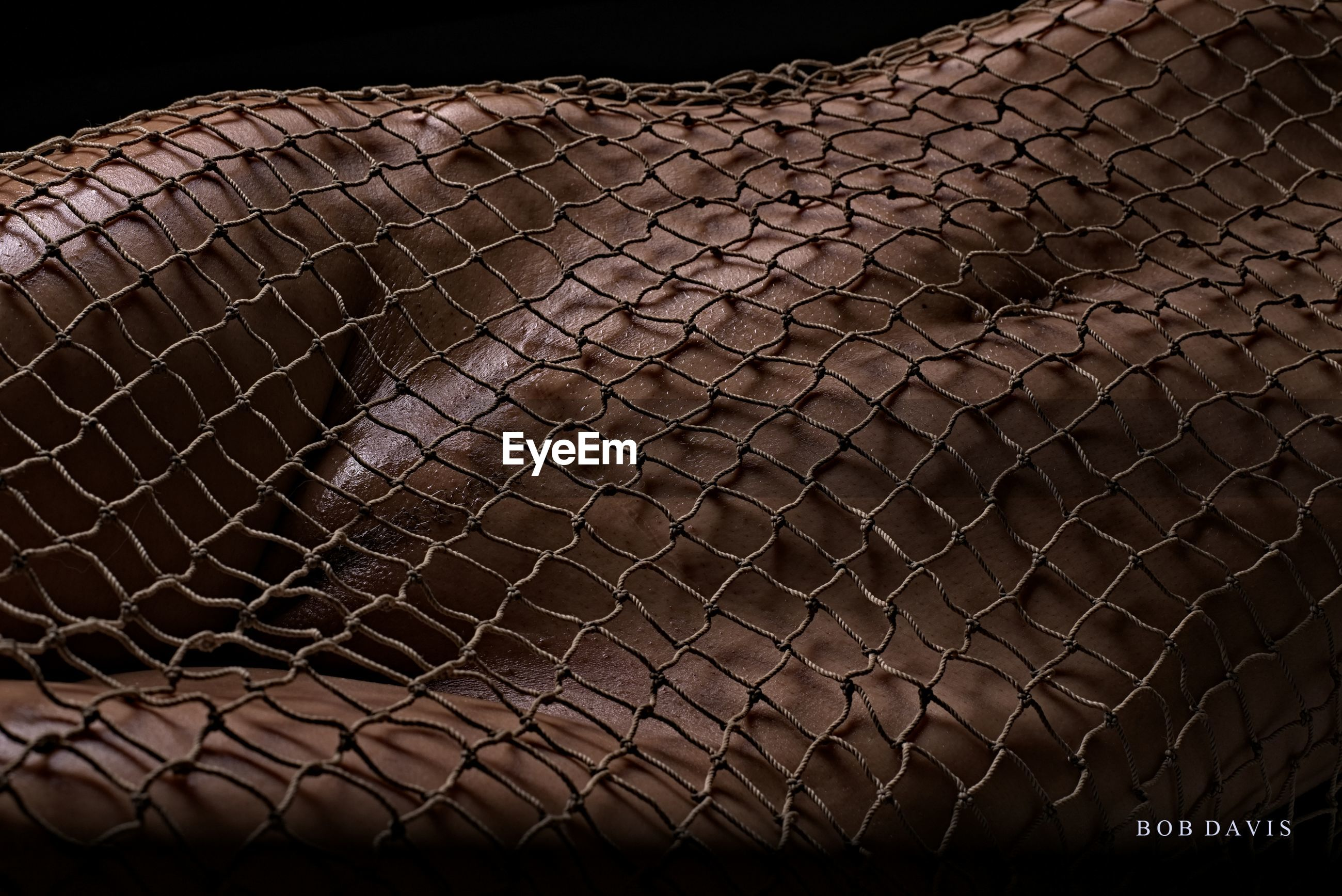 pattern, no people, close-up, fence, animal, backgrounds, animal themes, full frame, animal body part, security, animal wildlife, barrier, animal skin, boundary, textured, indoors, protection, reptile, animals in the wild, black background