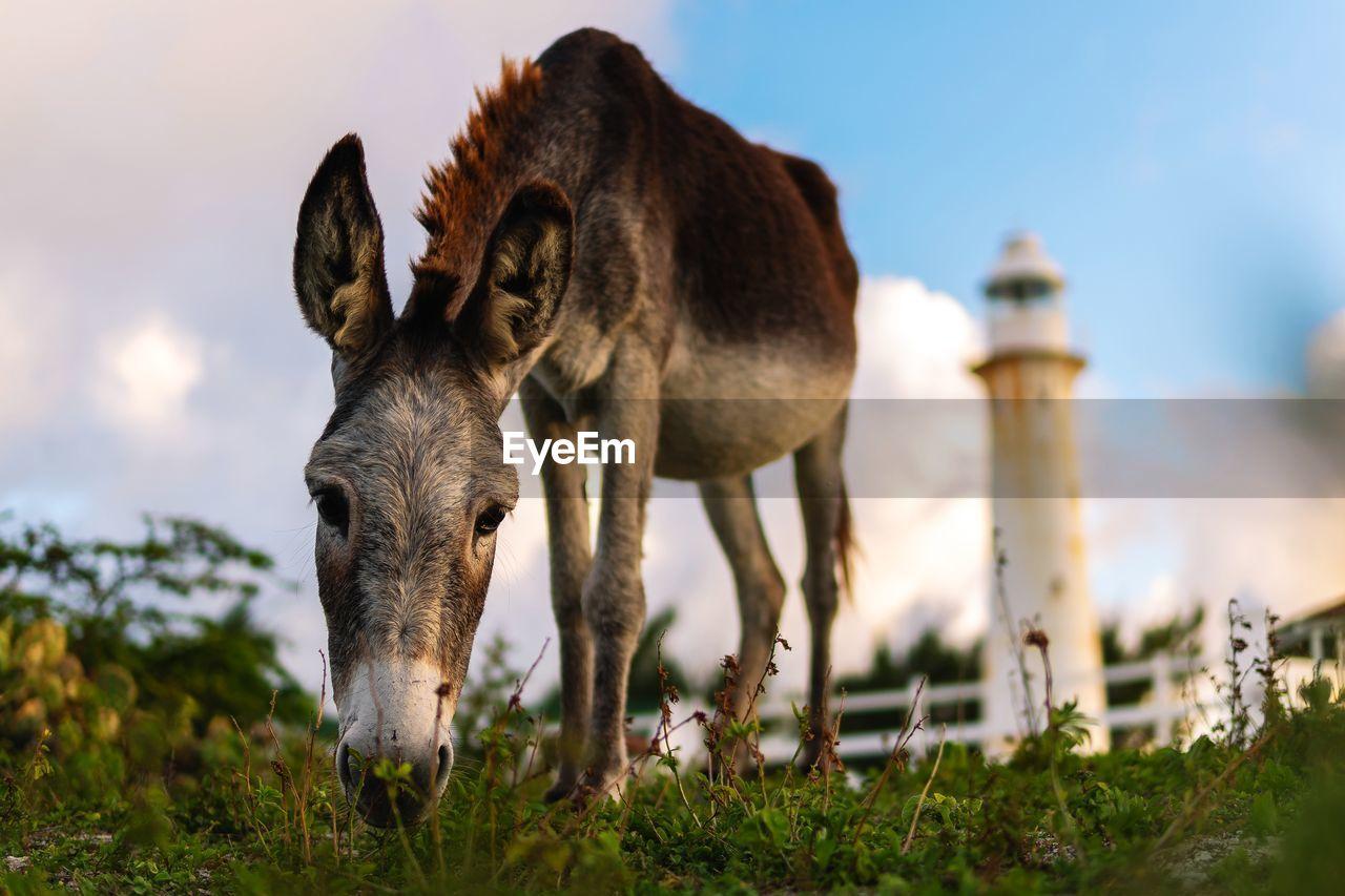 Donkey grazing on field
