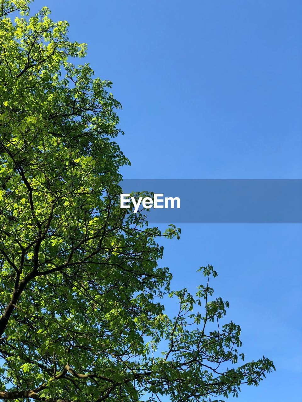 tree, sky, low angle view, plant, growth, beauty in nature, nature, blue, green color, no people, clear sky, day, tranquility, branch, outdoors, sunlight, leaf, plant part, idyllic, green, leaves, spring, tree canopy
