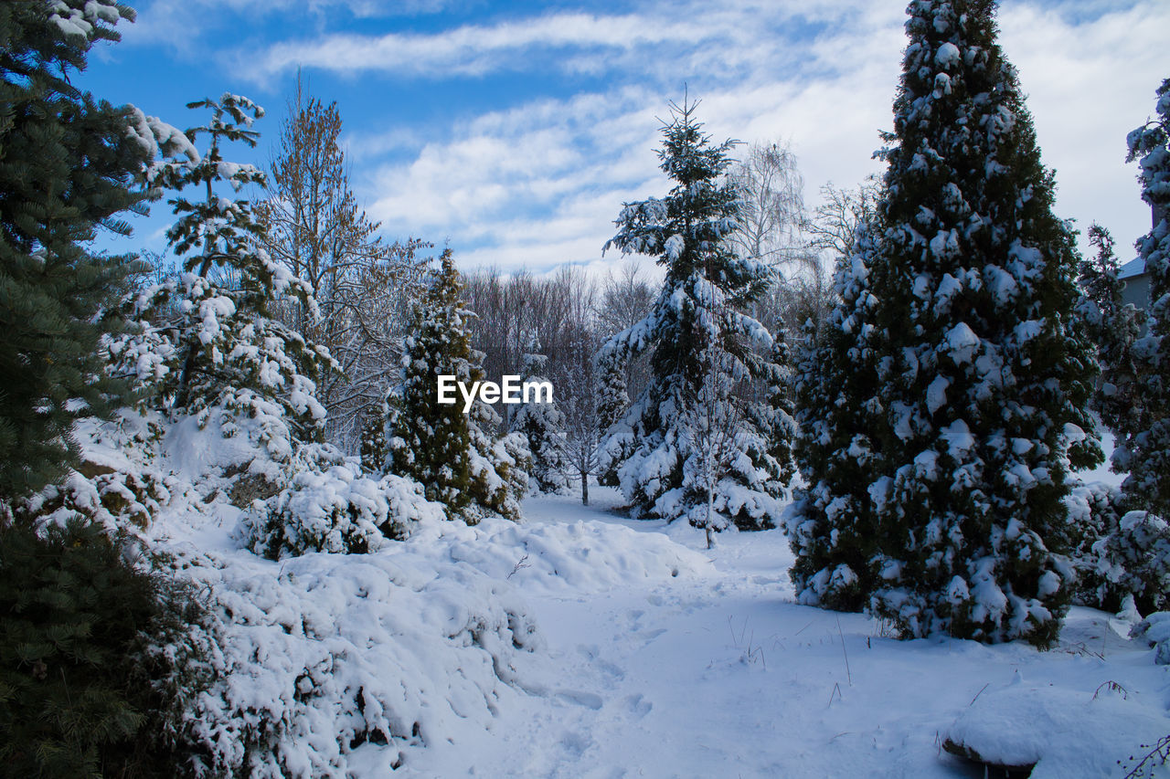 snow, winter, cold temperature, nature, tranquility, tree, beauty in nature, tranquil scene, no people, sky, cloud - sky, outdoors, scenics, day, landscape