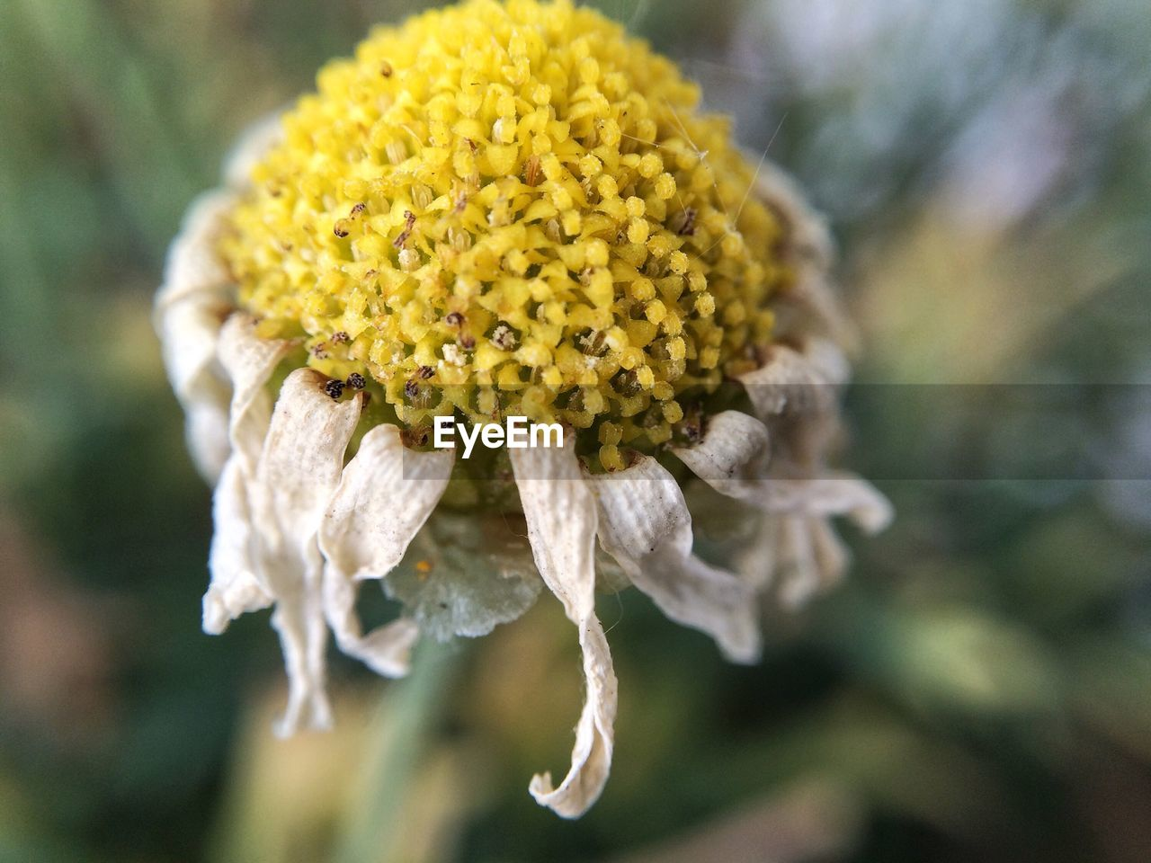 flowering plant, flower, vulnerability, fragility, beauty in nature, plant, freshness, close-up, growth, flower head, yellow, petal, inflorescence, focus on foreground, nature, day, no people, outdoors, selective focus, pollen