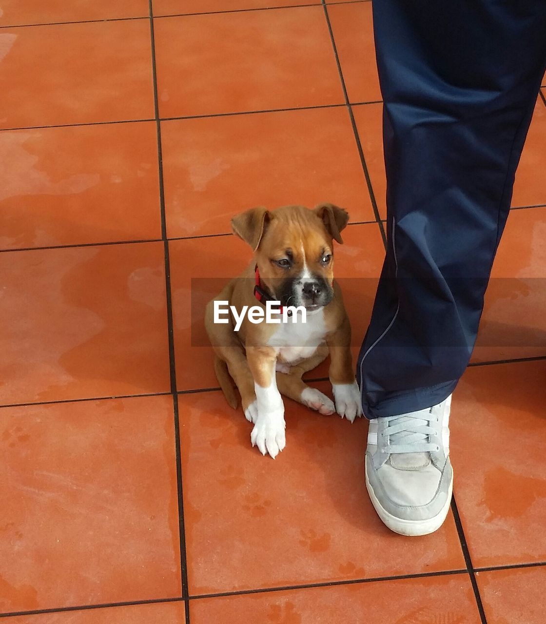 Low Section Of Man Standing By Puppy On Tiled Floor