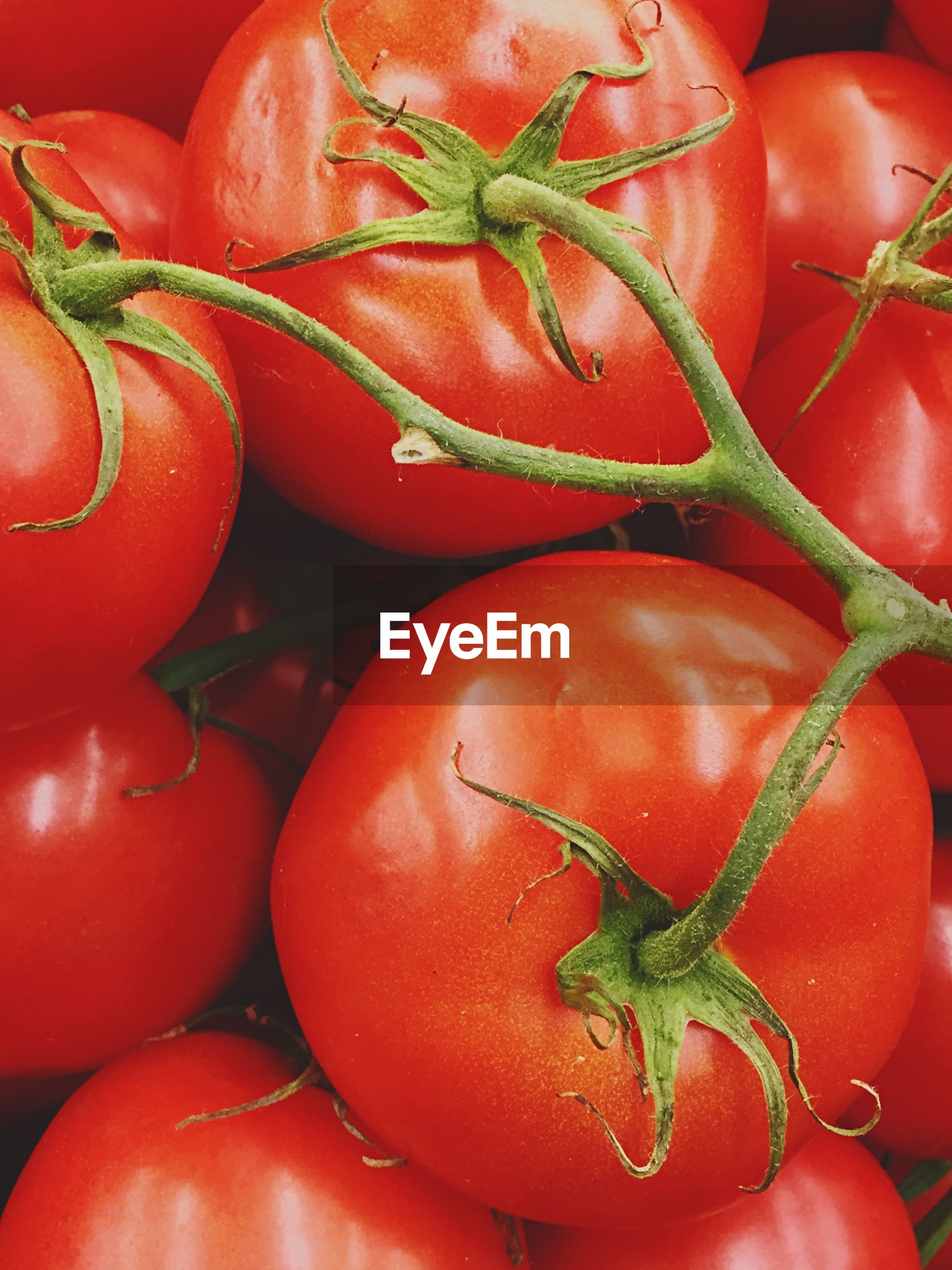 Close-up of fresh tomatoes