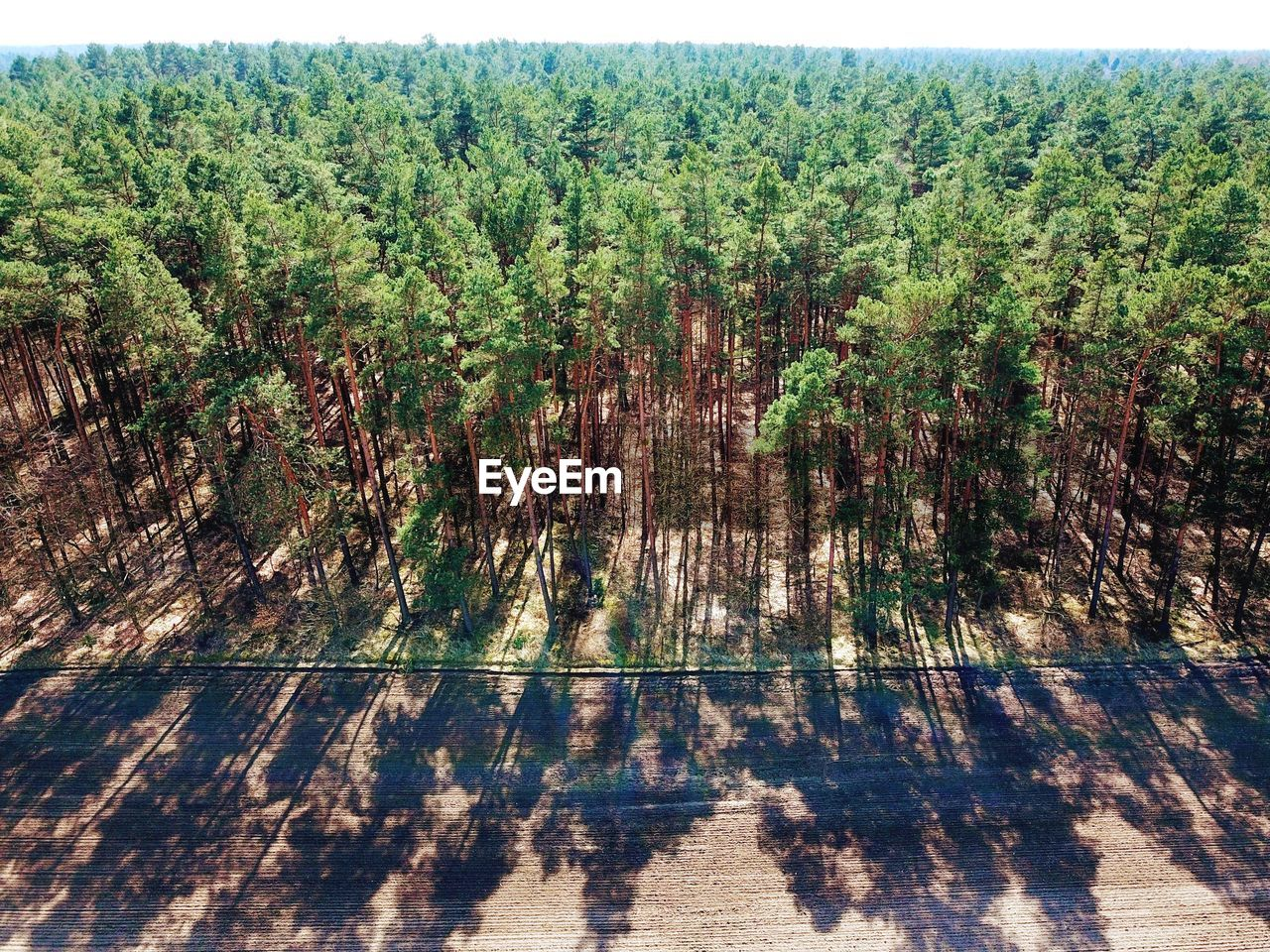High Angle Drone Perspective Of German Forest Front