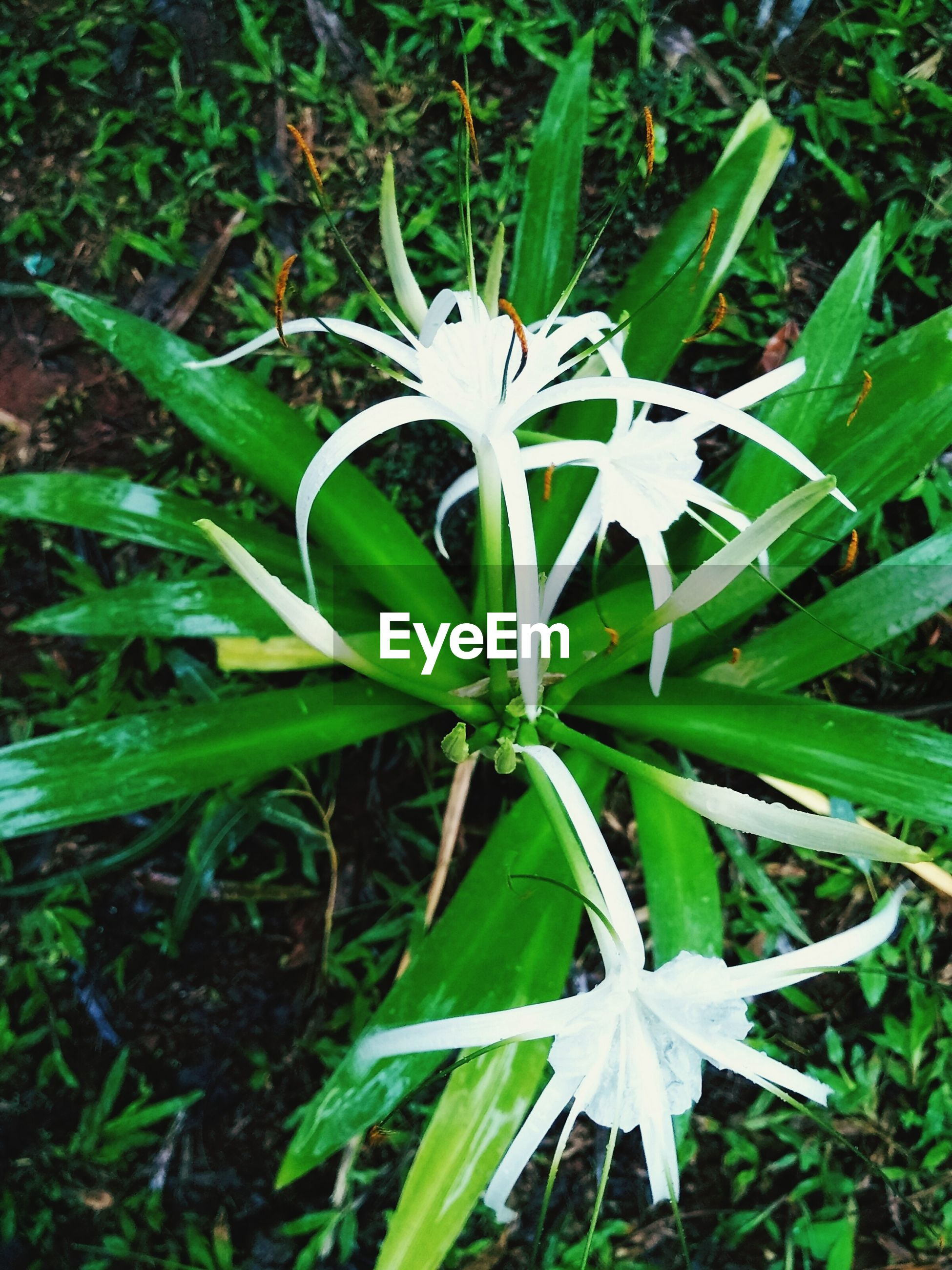 growth, plant, freshness, leaf, flower, green color, nature, fragility, beauty in nature, close-up, blooming, day, white color, field, no people, flower head, stem, high angle view, outdoors, botany