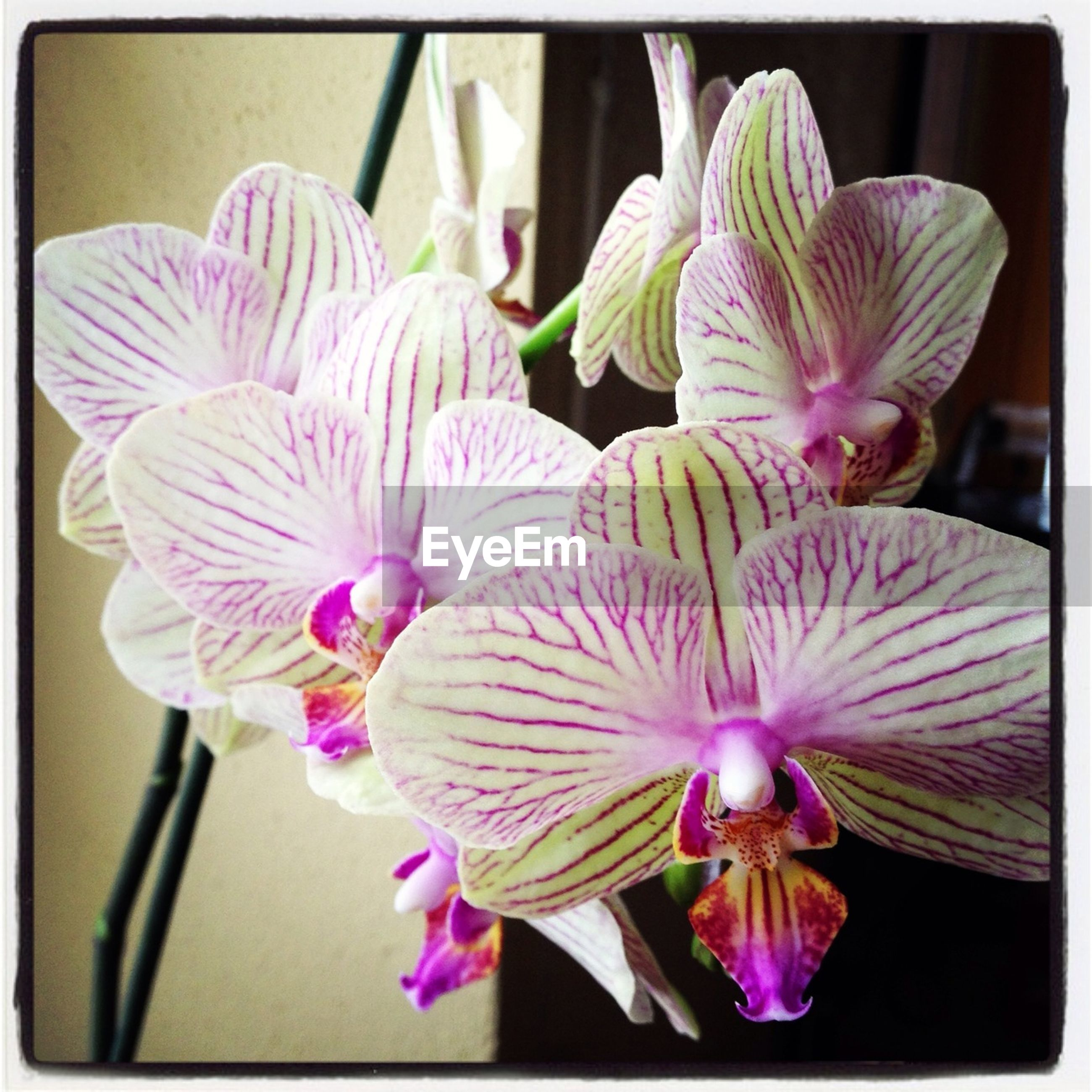 flower, petal, fragility, freshness, flower head, orchid, close-up, purple, transfer print, growth, beauty in nature, nature, auto post production filter, indoors, blooming, plant, stamen, pink color, focus on foreground, in bloom
