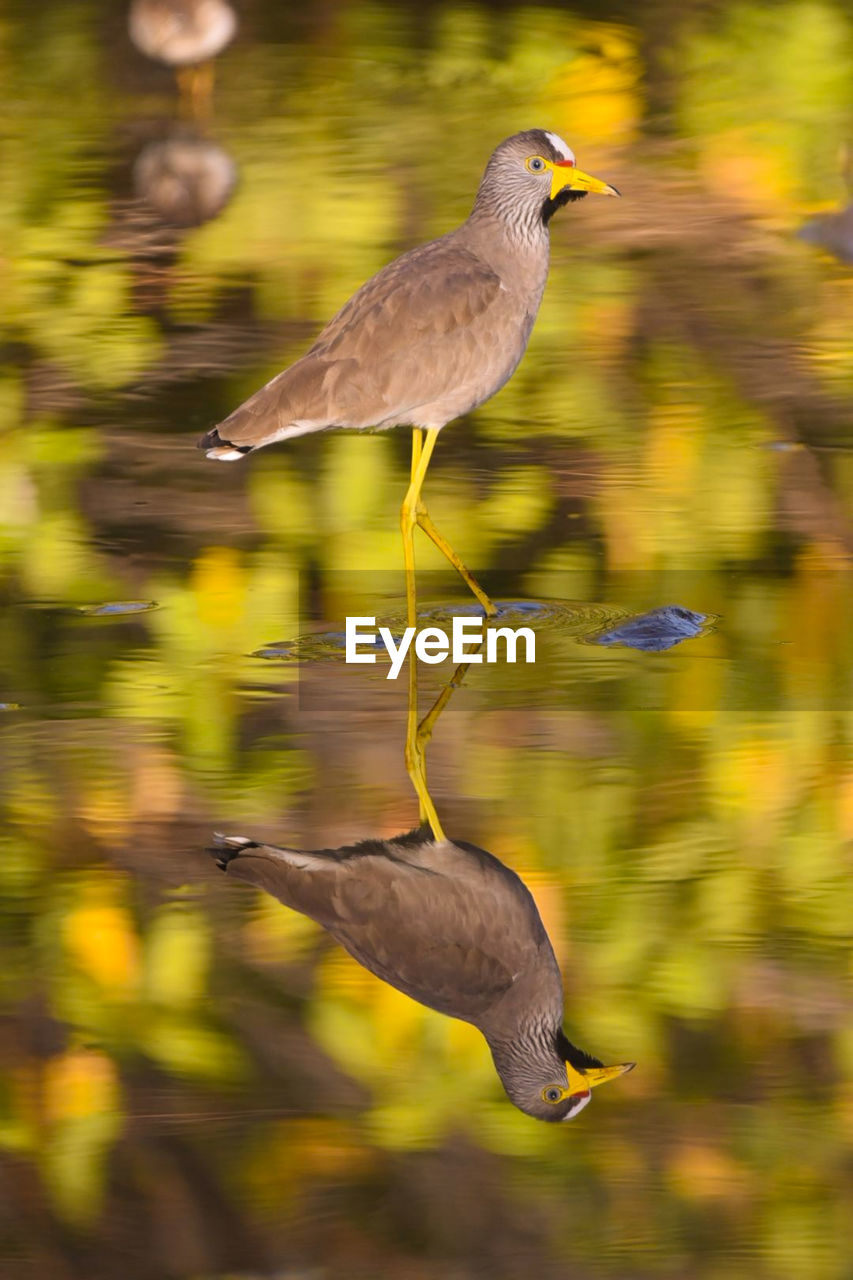 bird, animal wildlife, animals in the wild, animal, animal themes, vertebrate, one animal, blurred motion, motion, nature, focus on foreground, water, no people, day, flying, side view, outdoors