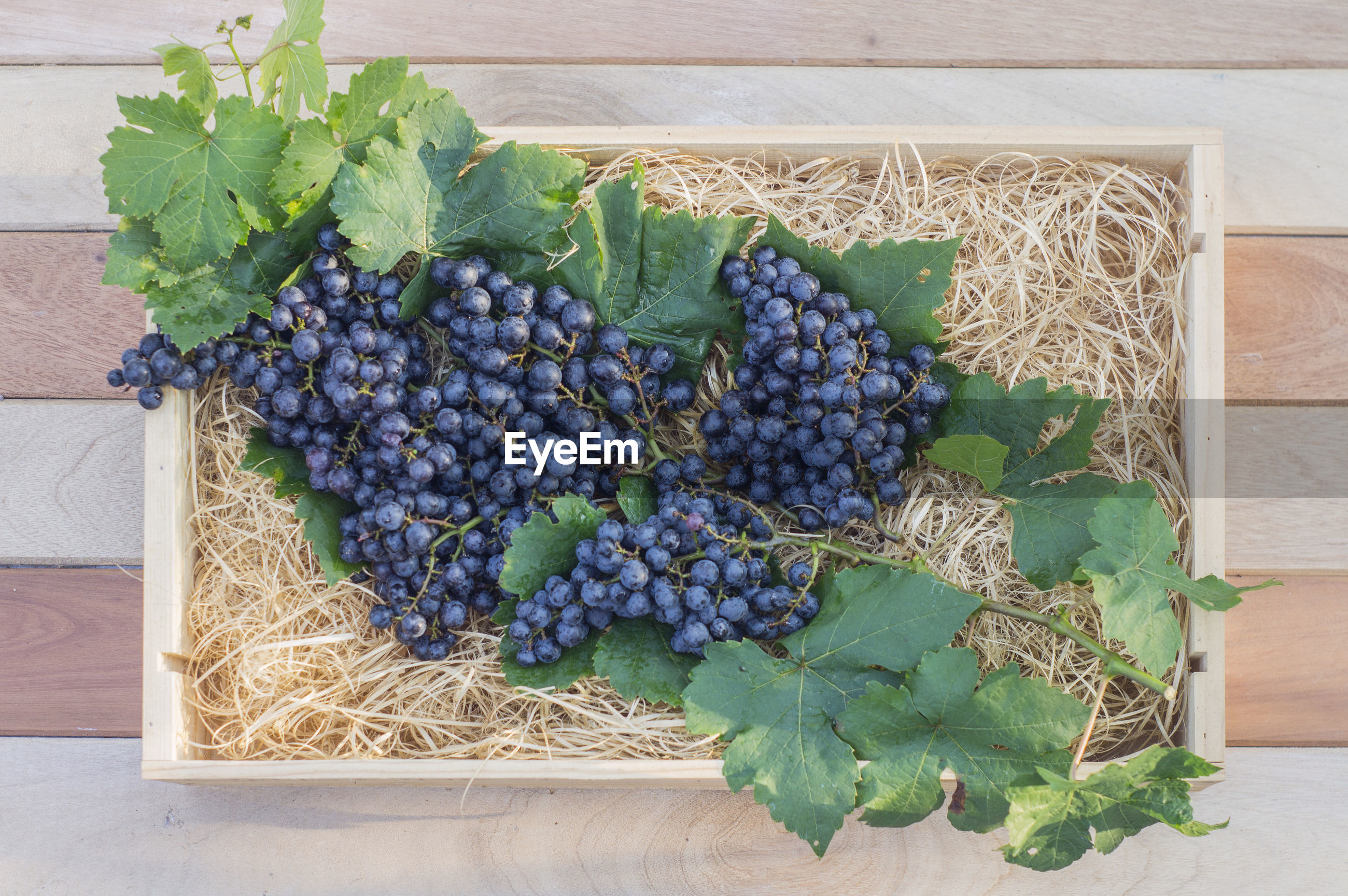 High angle view of grapes growing on table