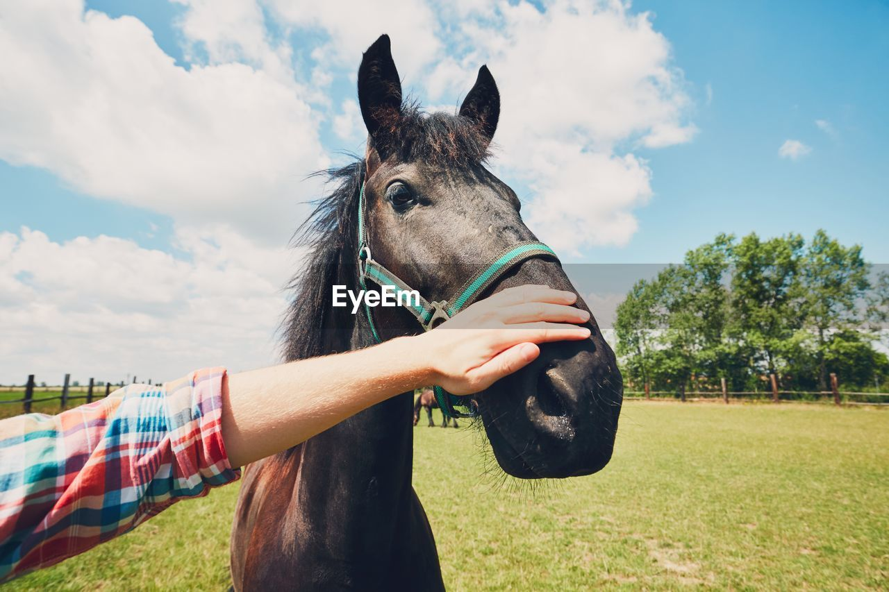 Cropped Image Of Farmer Touching Horse