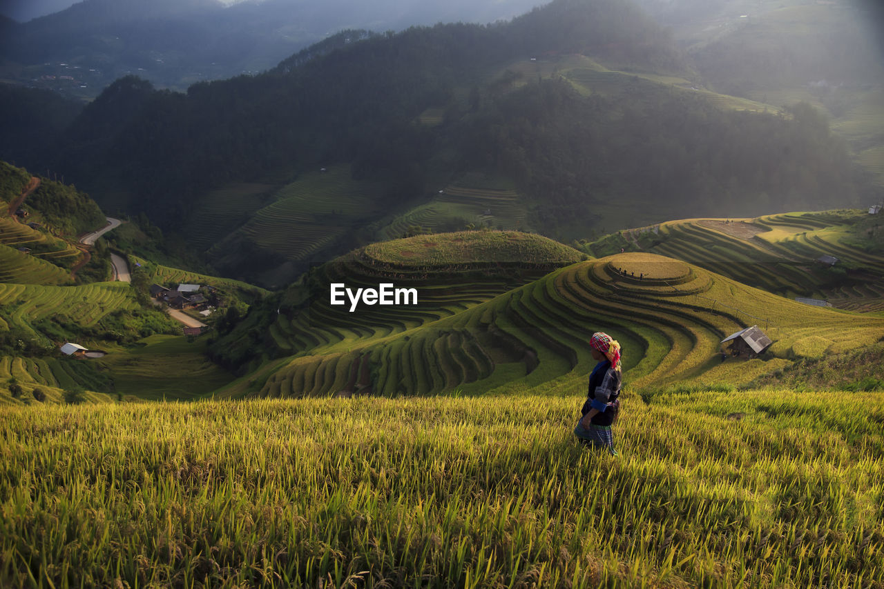 agriculture, farm, rice paddy, field, rice - cereal plant, farmer, nature, growth, terraced field, landscape, crop, mountain, real people, plant, one person, beauty in nature, asian style conical hat, curve, outdoors, occupation, scenics, cereal plant, food, women, working, day, people