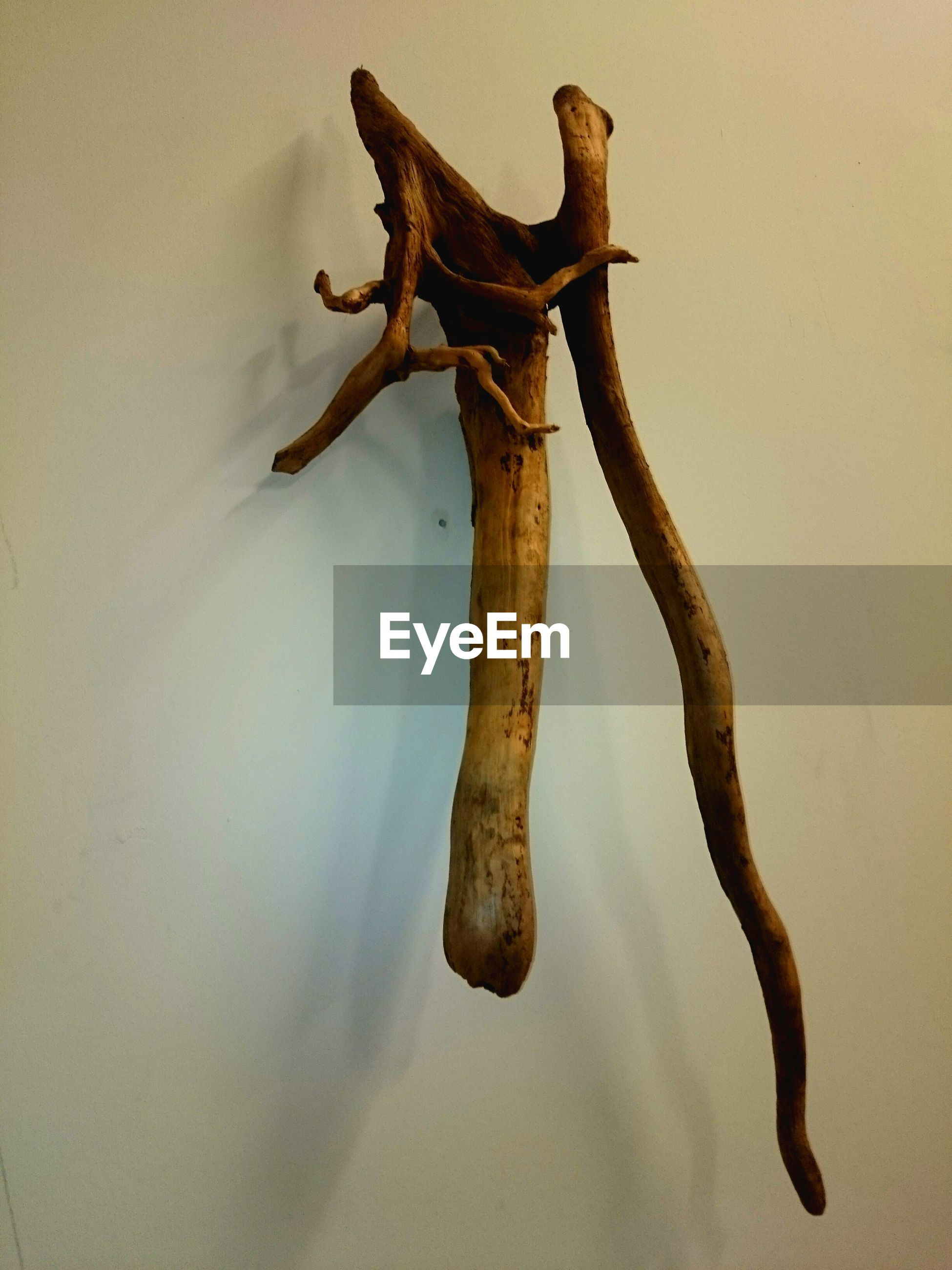 indoors, close-up, wood - material, wall - building feature, no people, low angle view, animal themes, day, nature, hanging, brown, wall, branch, tree trunk, dead plant, textured, death, old, one animal