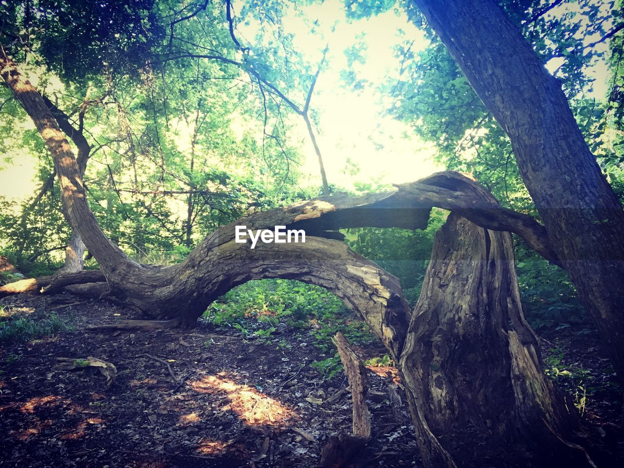 tree, tree trunk, branch, nature, tranquil scene, day, beauty in nature, forest, tranquility, growth, outdoors, no people, dead tree, sky