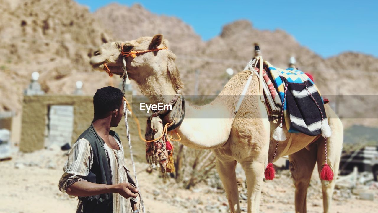 Man standing with camel in desert