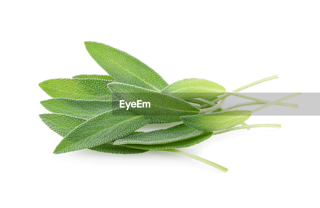 studio shot, white background, green color, leaf, plant part, close-up, indoors, nature, cut out, freshness, plant, copy space, no people, food and drink, herb, still life, growth, beauty in nature, food, ingredient, leaves