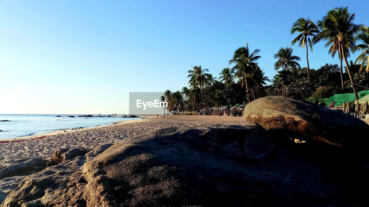water, sky, tree, sea, beach, land, palm tree, tropical climate, plant, nature, beauty in nature, scenics - nature, tranquility, clear sky, tranquil scene, day, sunlight, blue, sand, no people, horizon over water, outdoors, coconut palm tree, tropical tree