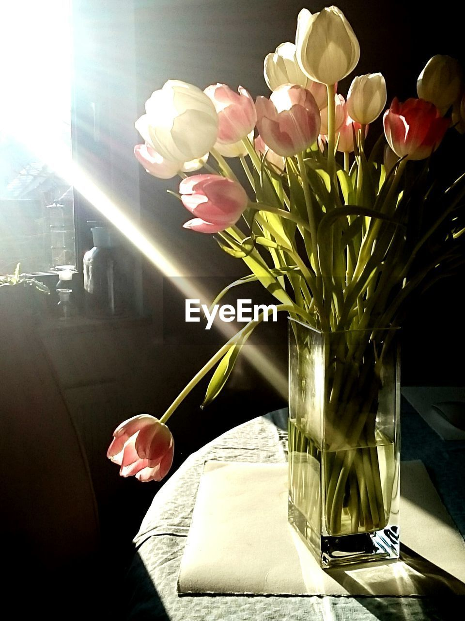 flower, vase, indoors, sunlight, tulip, petal, nature, beauty in nature, no people, flower head, bouquet, freshness, fragility, day, close-up