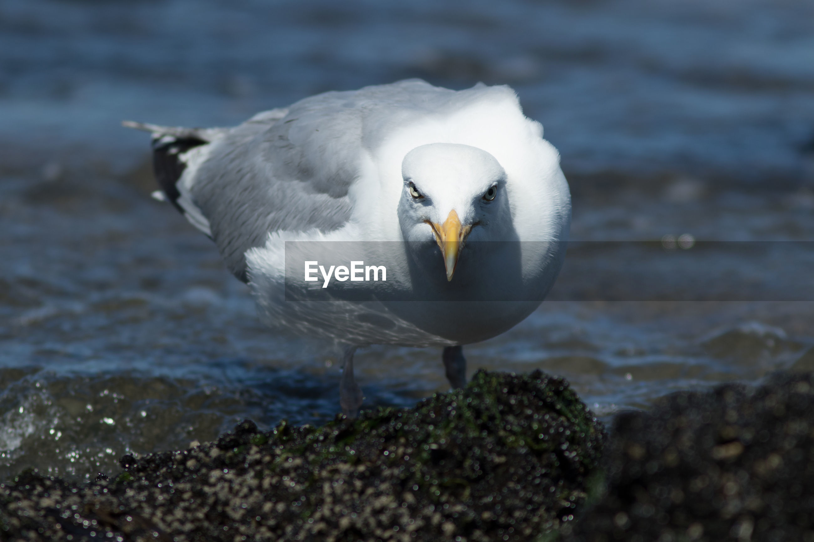 CLOSE-UP OF SEAGULL ON A BEACH