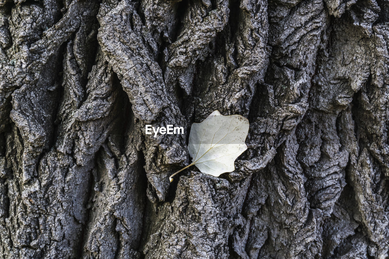 trunk, tree trunk, textured, plant, tree, close-up, day, nature, no people, growth, rough, full frame, outdoors, pattern, plant part, backgrounds, focus on foreground, plant bark, beauty in nature, selective focus, bark, natural condition