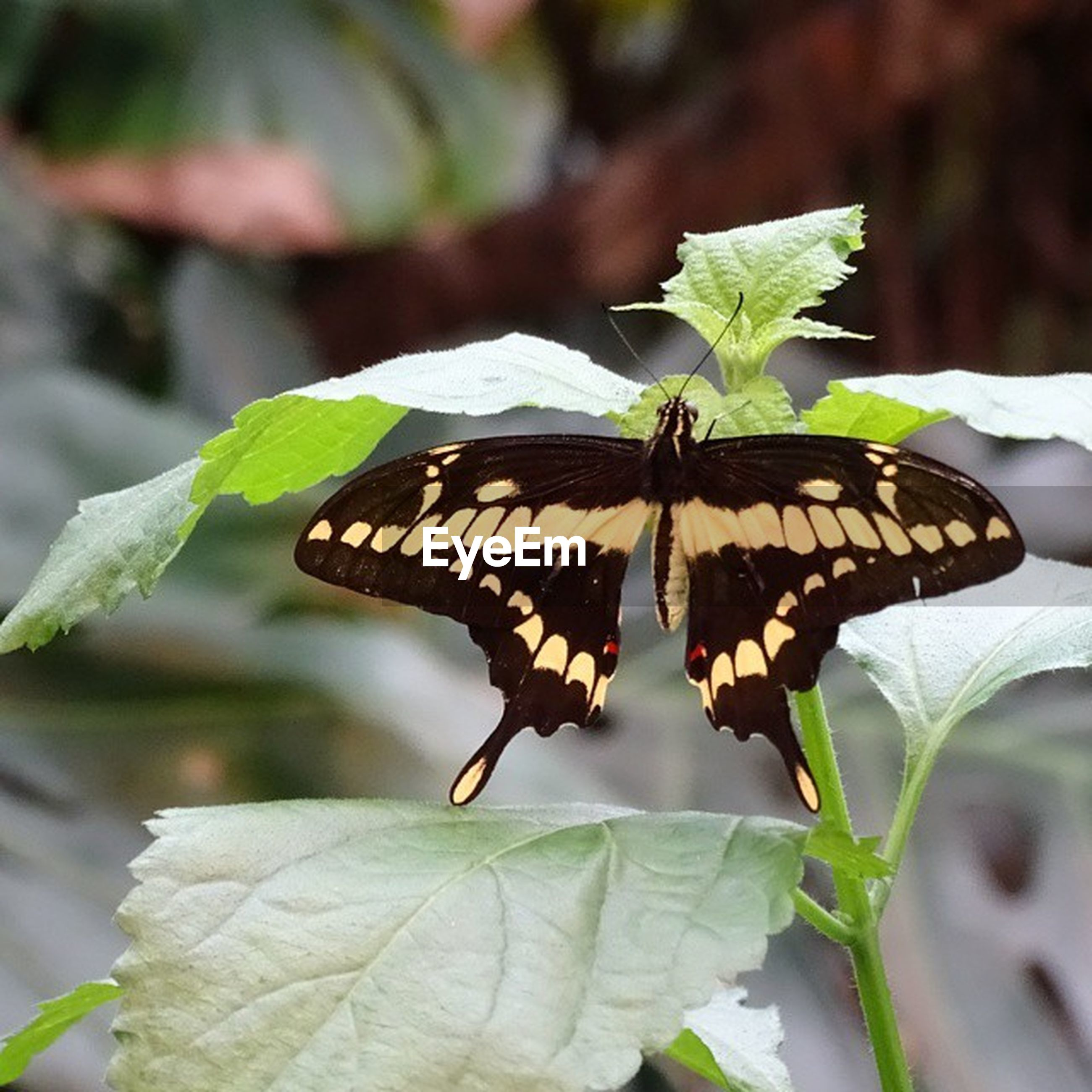 insect, one animal, animals in the wild, butterfly - insect, animal themes, wildlife, butterfly, focus on foreground, leaf, animal wing, close-up, animal antenna, animal markings, plant, beauty in nature, natural pattern, nature, fragility, perching, spread wings